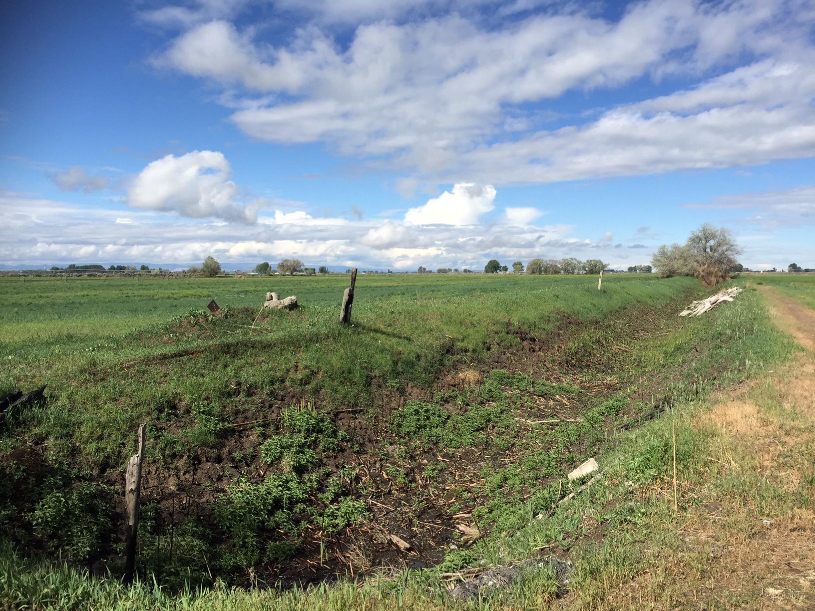 Wild asparagus still grows abundantly along the irrigation ditches.