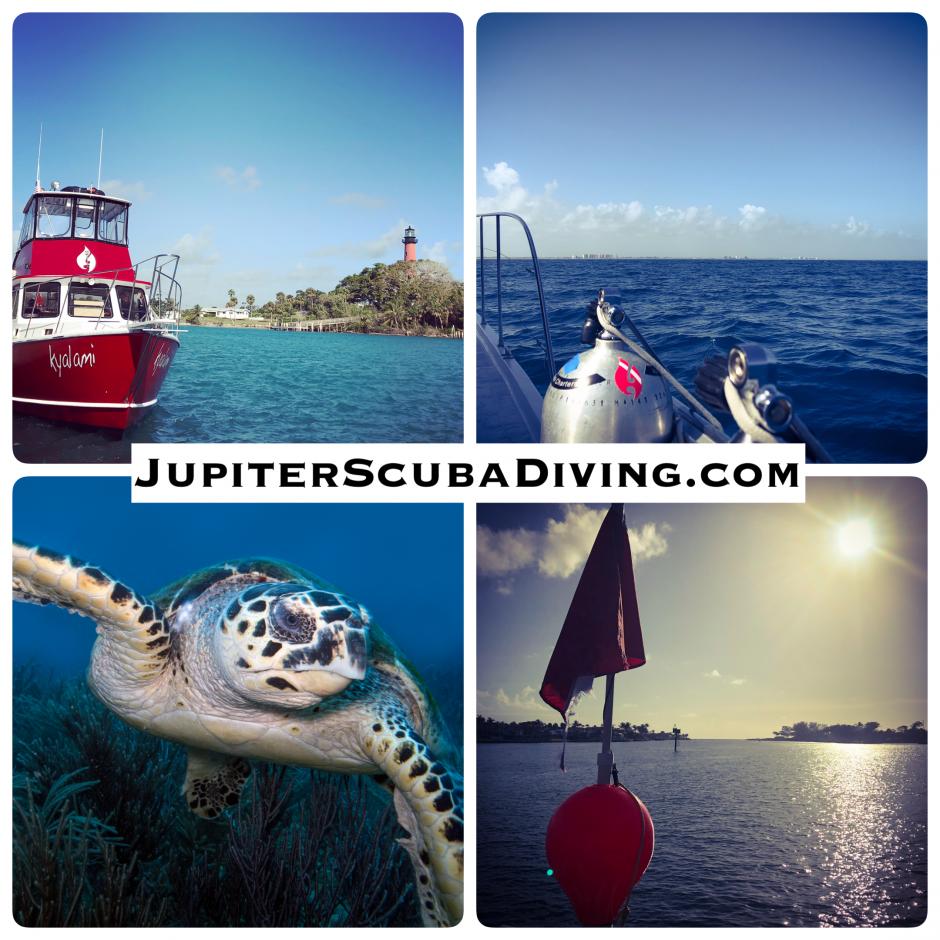 JSD Dive Report 2.23.18.png