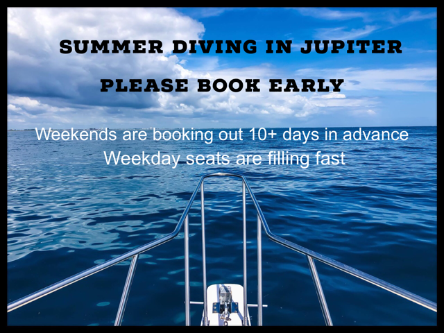 Summer Diving 1.PNG