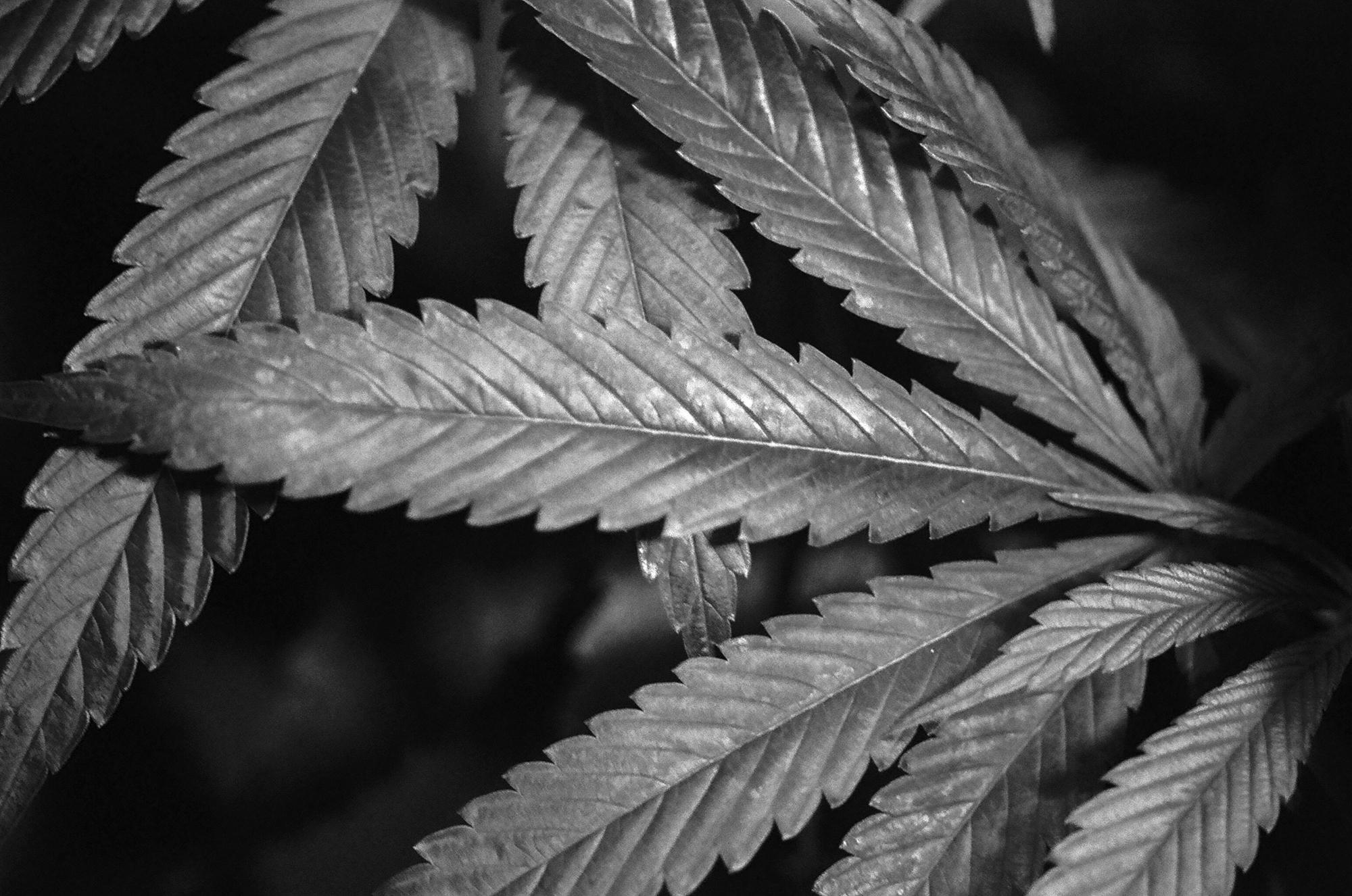 Plants--20.jpg