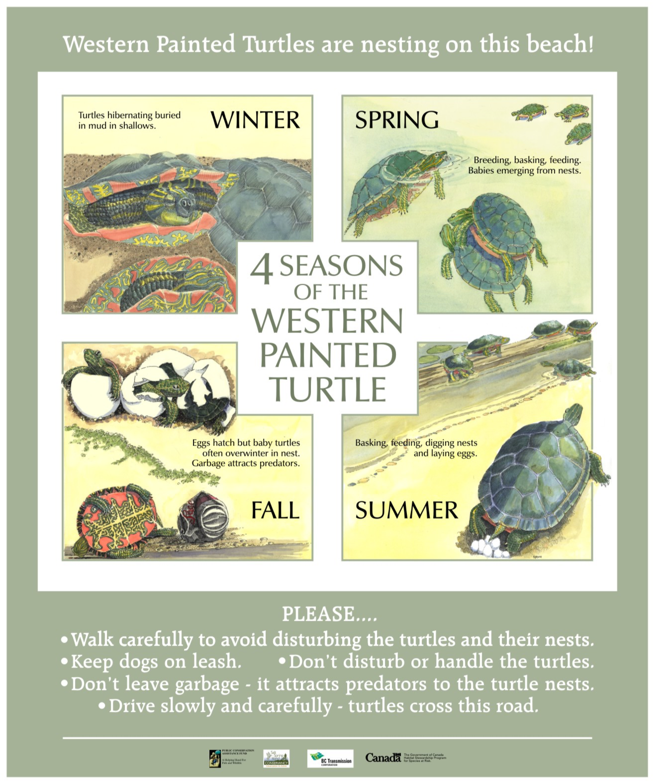 Turtle sign 1 .png