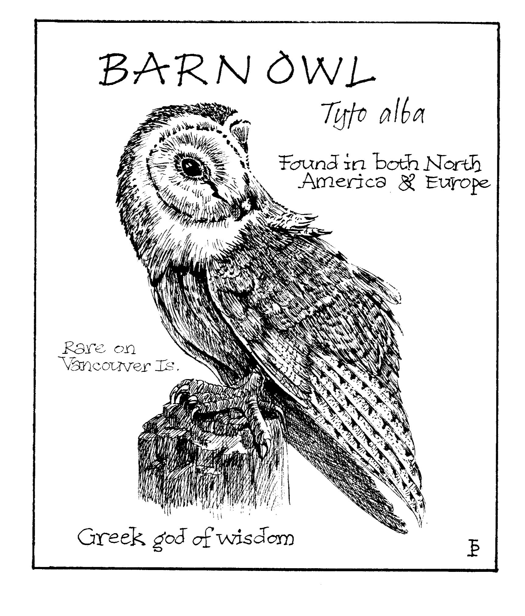 barnowl copy.png