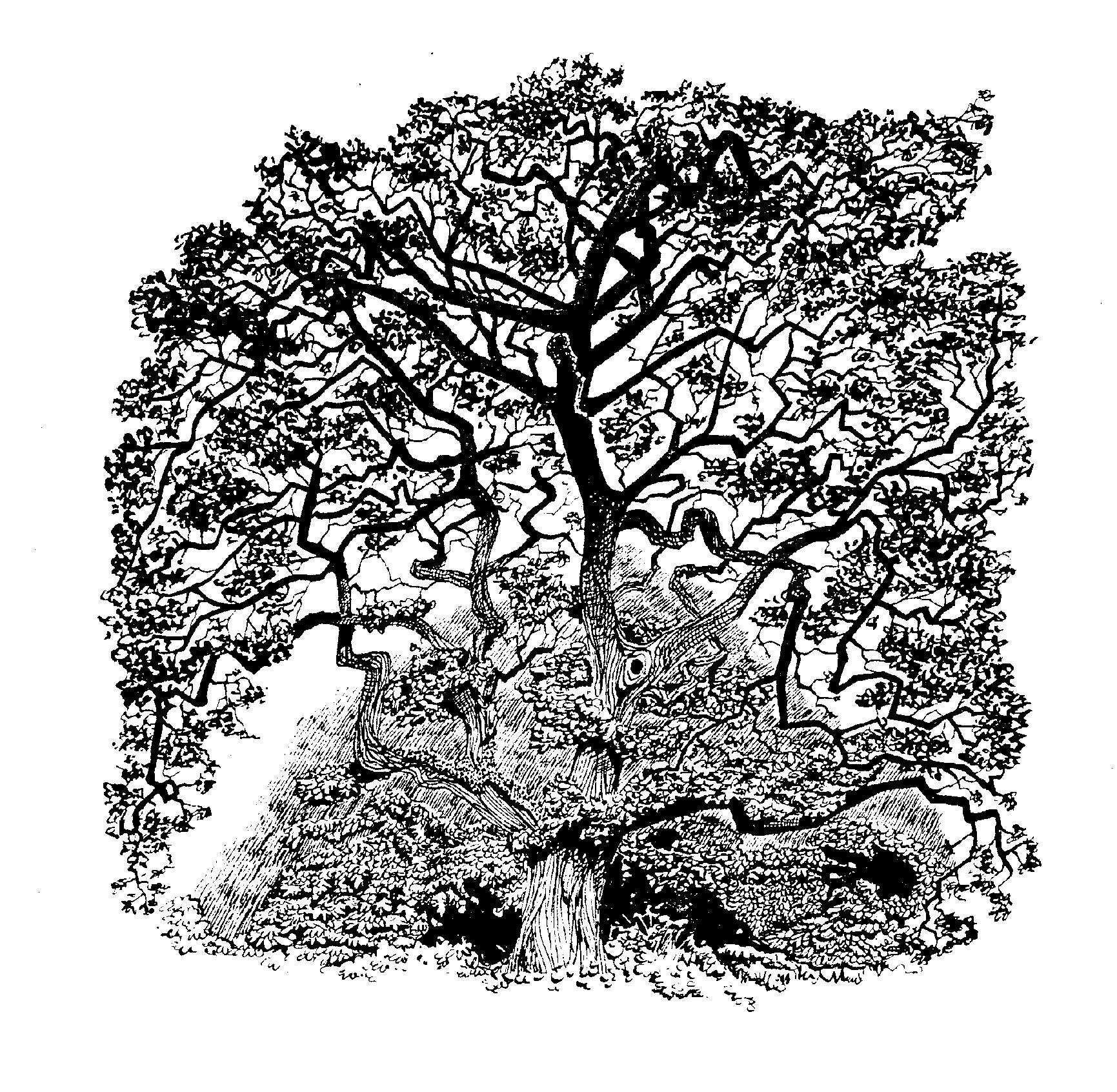 garryoaktree copy.png