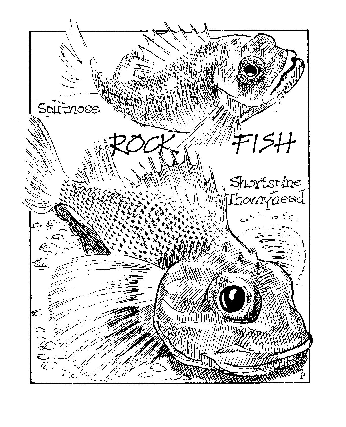 rockfish copy.png