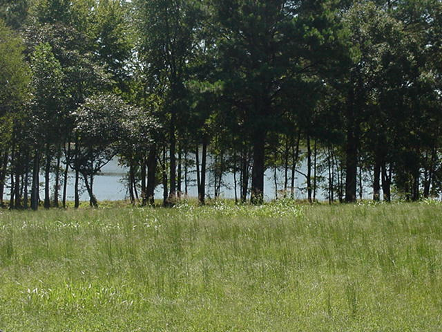 Cherokee Landing Shoreline1.jpg