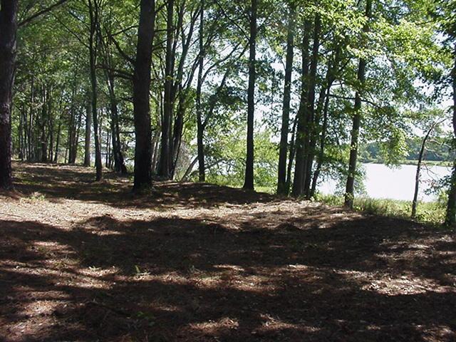 Cherokee Landing Shoreline4.jpg