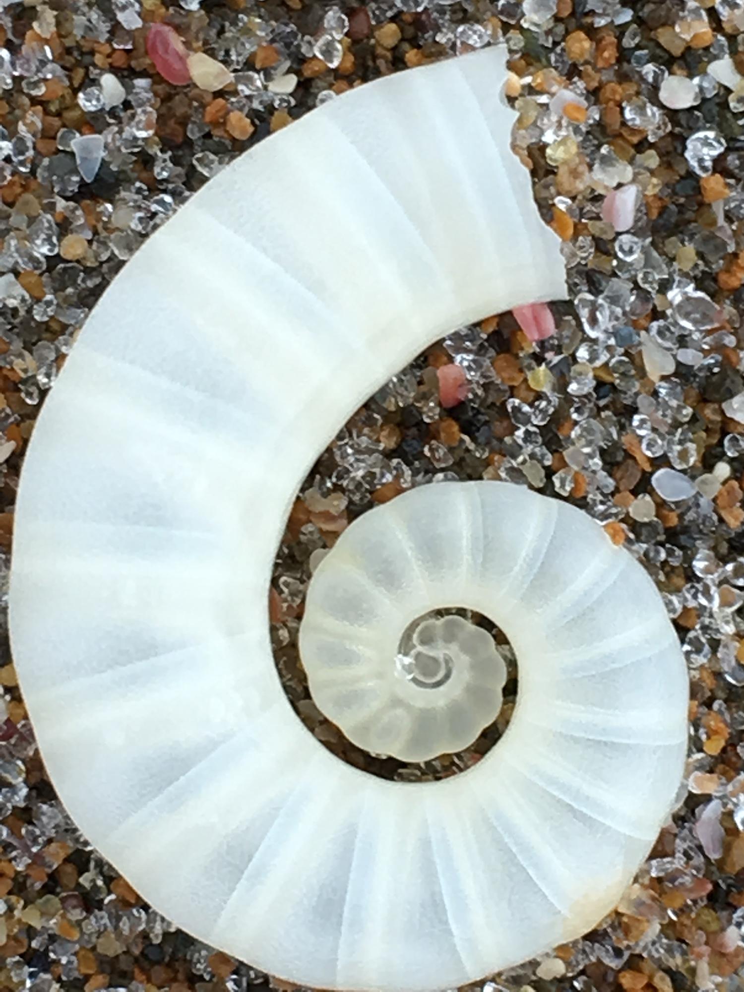 Shoreline Treasures - Soul-filling eye-candy.