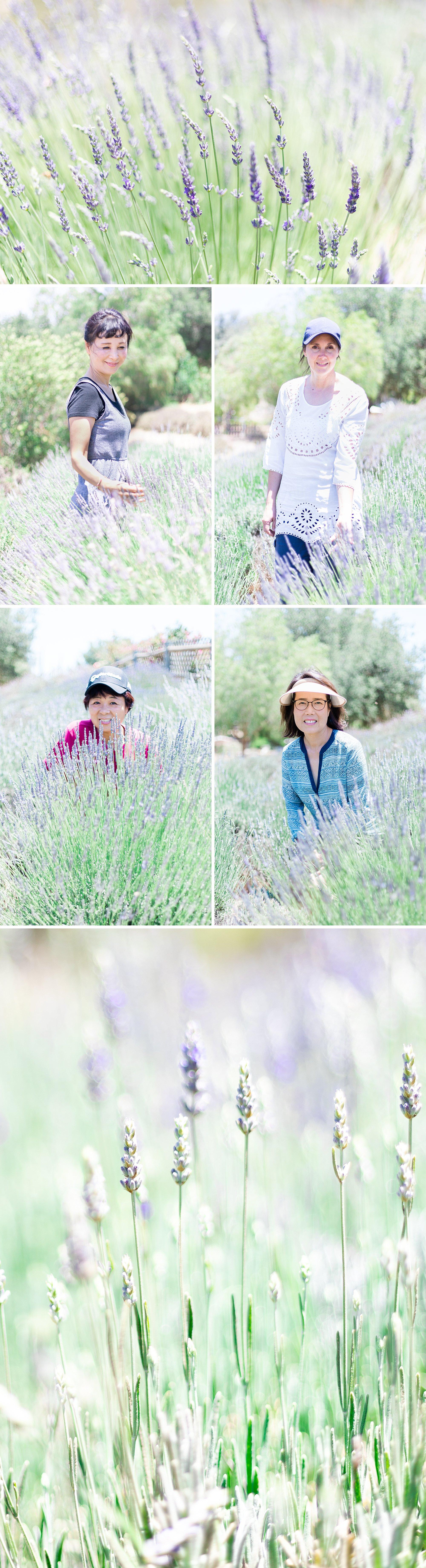 Lavender_Farm_Post_0011.jpg