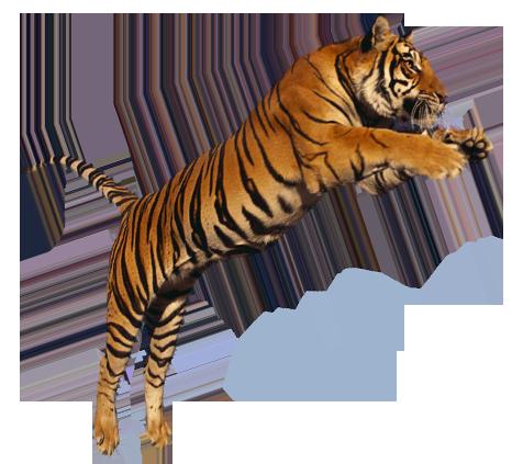 Tiger-jumping-transparent-png-image.png