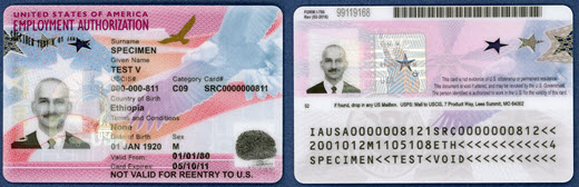 Sample of front and back of Employment Authorization Document (without travel document combination)