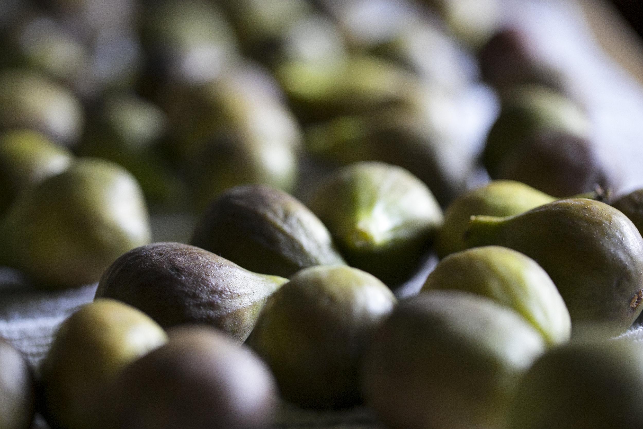 Figs-2.jpg