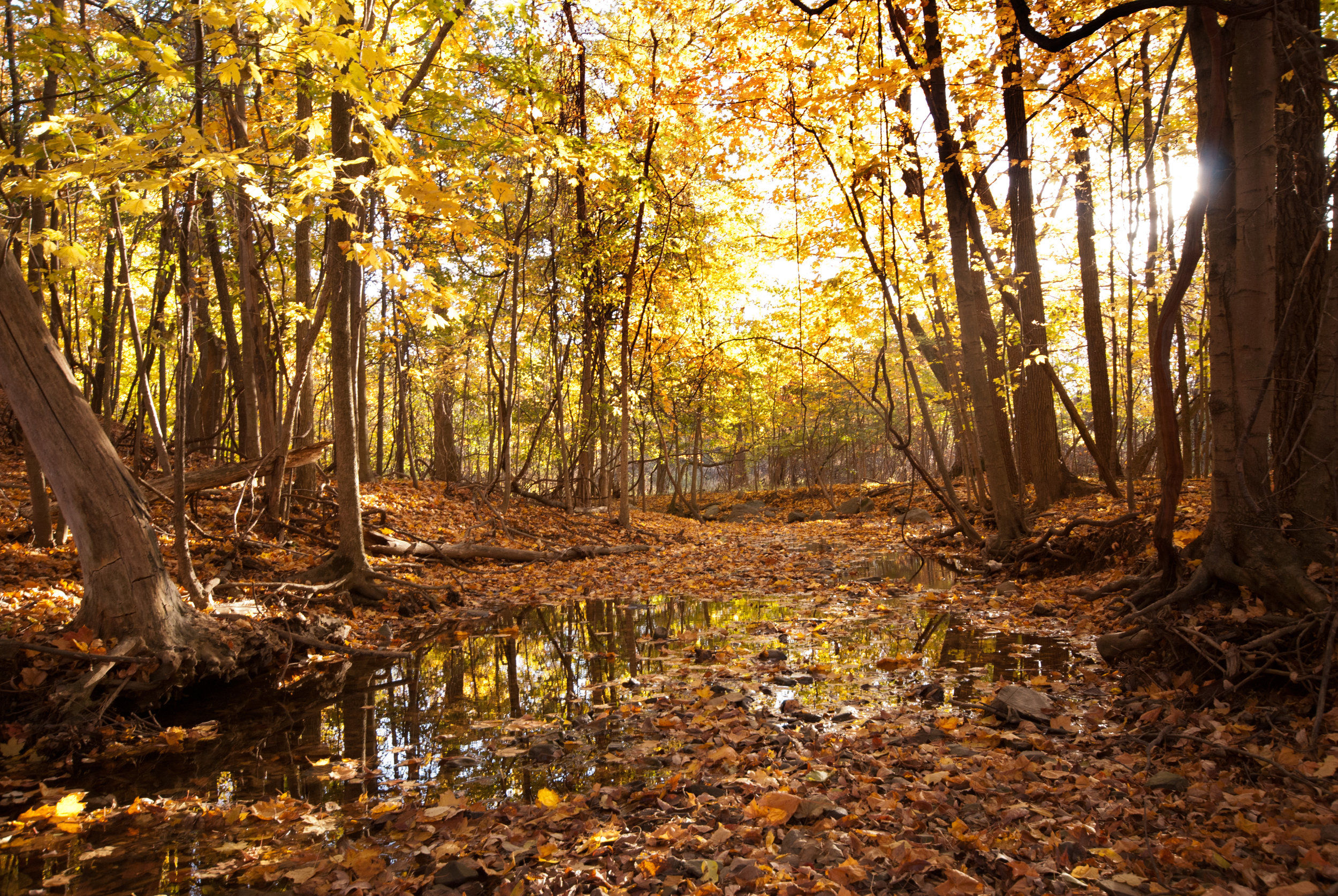 woodland pool and fall color_CBrilmyer.jpg