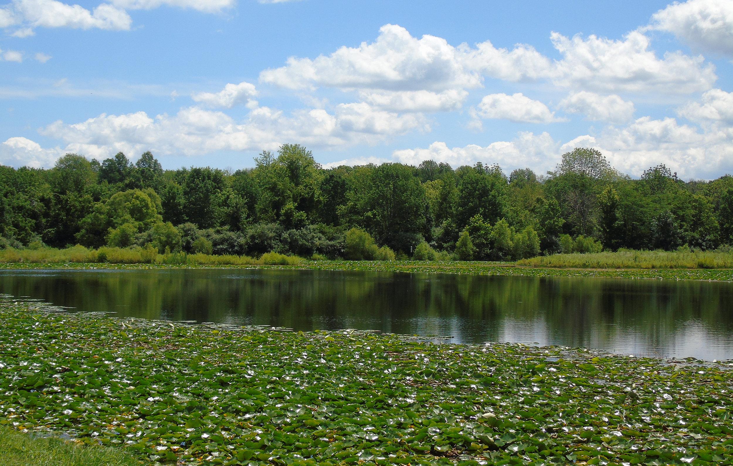 SLR_Buzzard's Roost Lake_July_C Svoboda.jpg