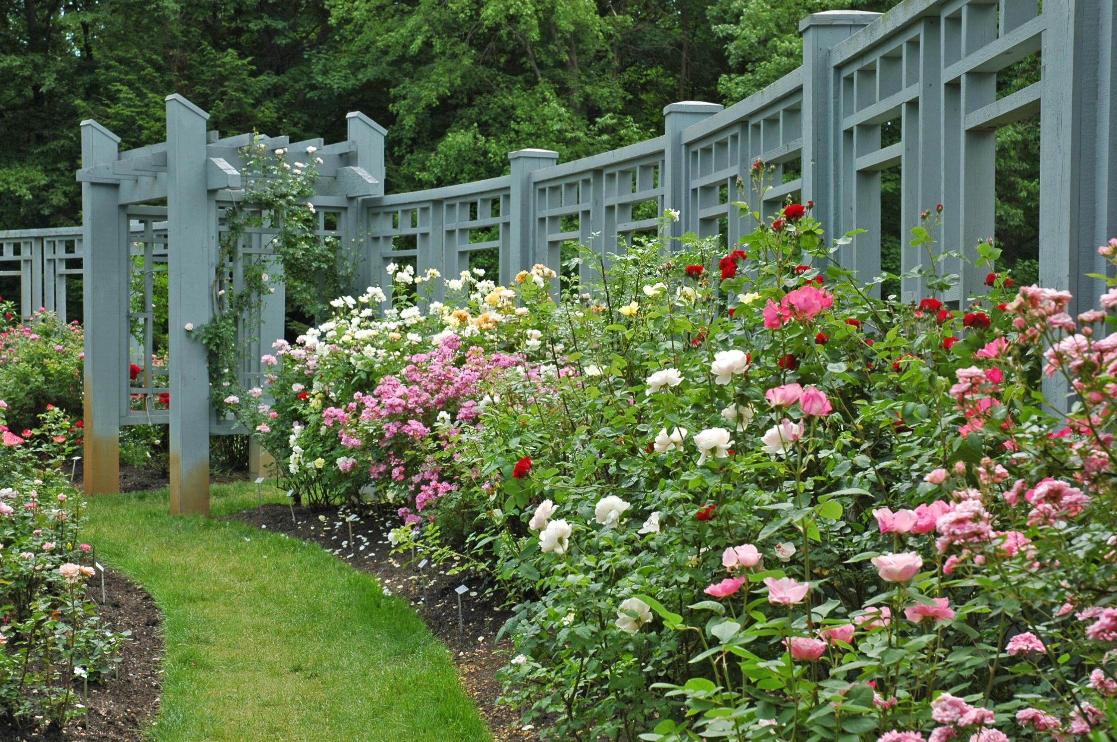 INN_roses by rose garden trellis_June_B Knowles.jpg