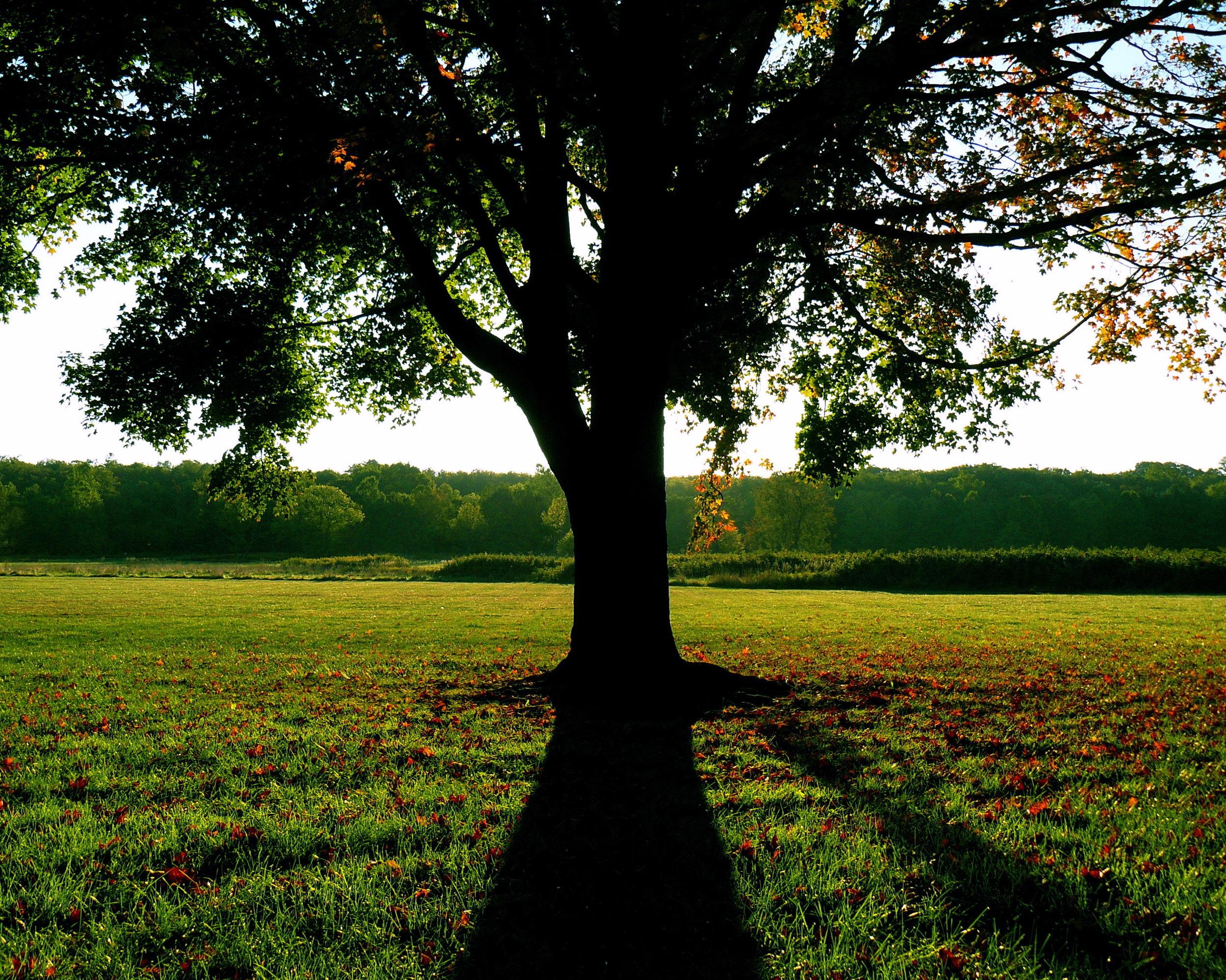 tree and shadow at HBK_TP.jpg