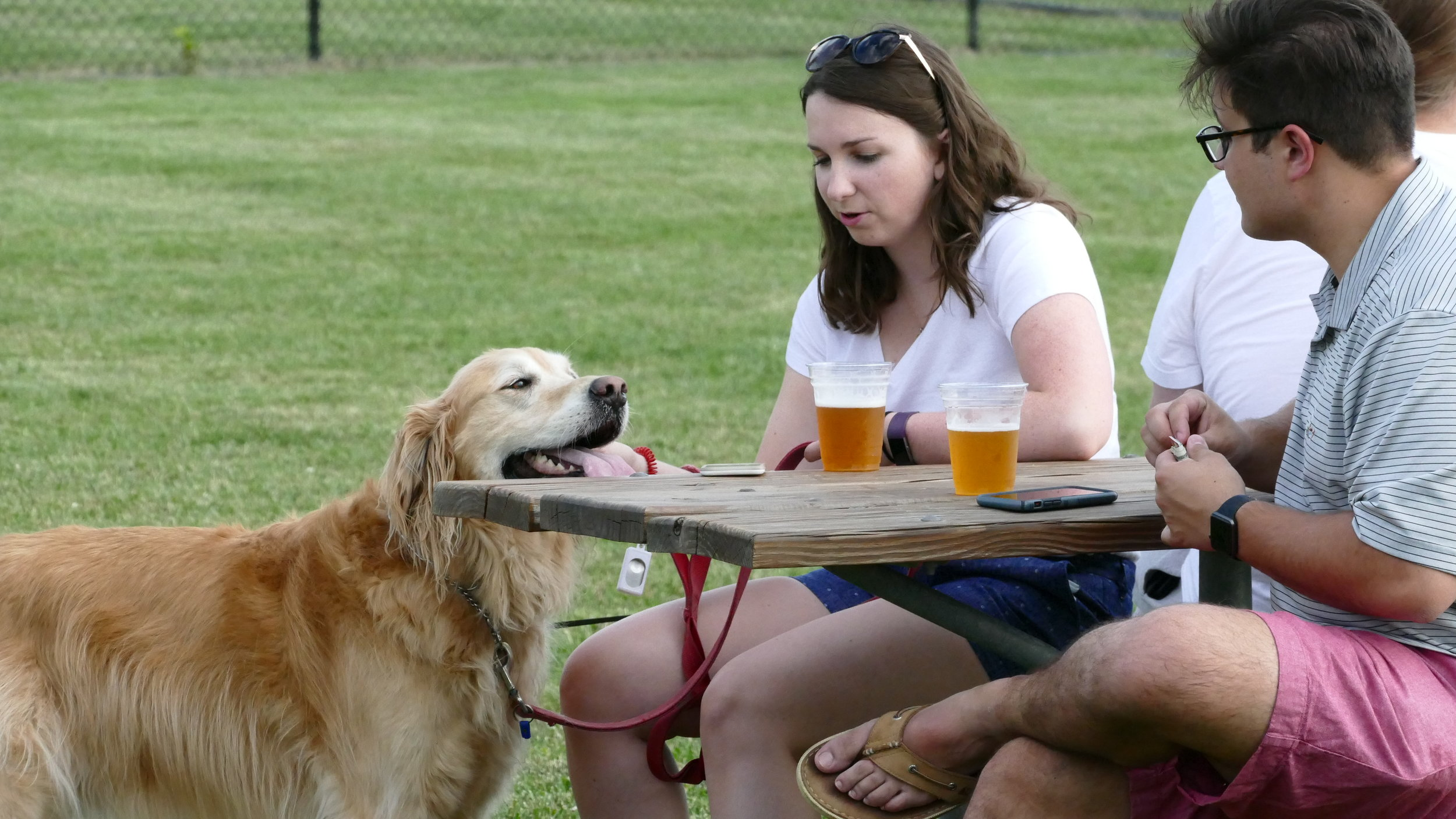 Millennials dogs and beer.JPG