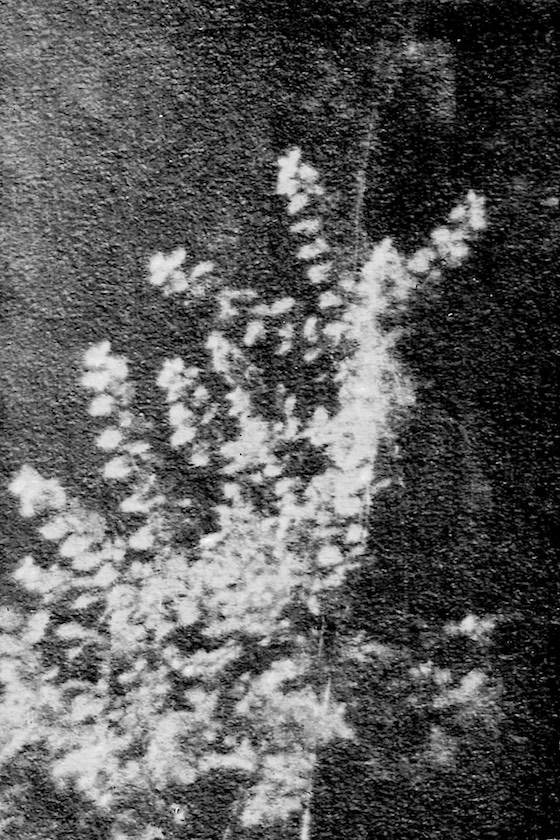 lumen (4).jpg
