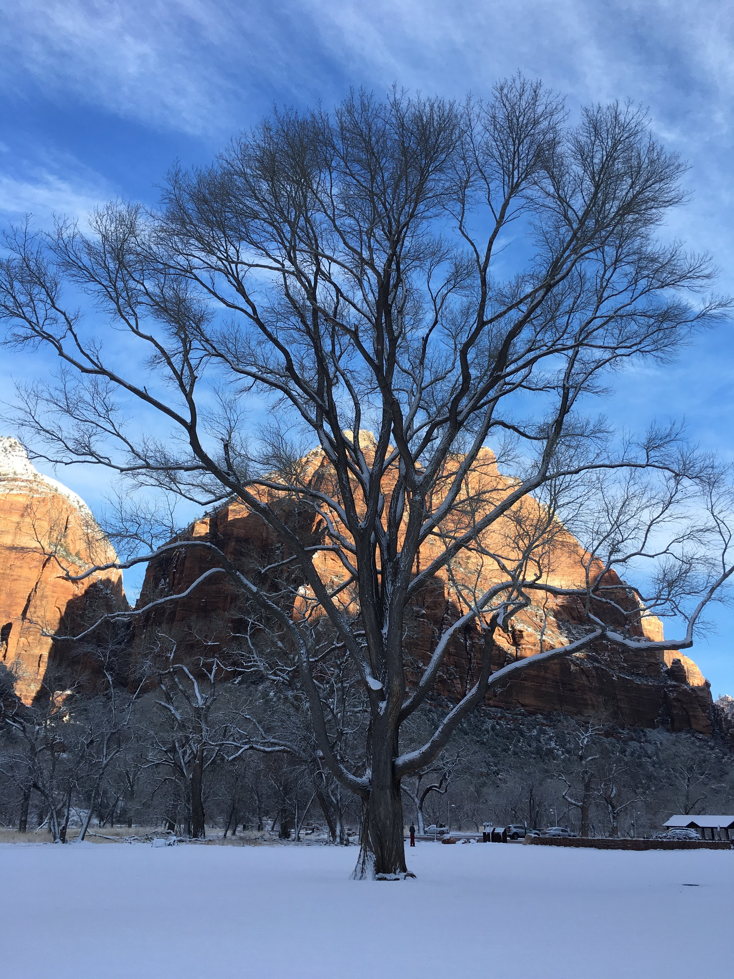 Zion Tree.jpg