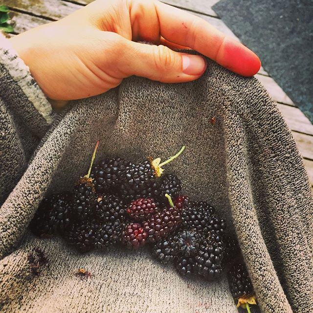 A few thorns and purple fingers later, the freshest blackberries a girl could ask for 💜 #antioxidants #fiber! #fun
