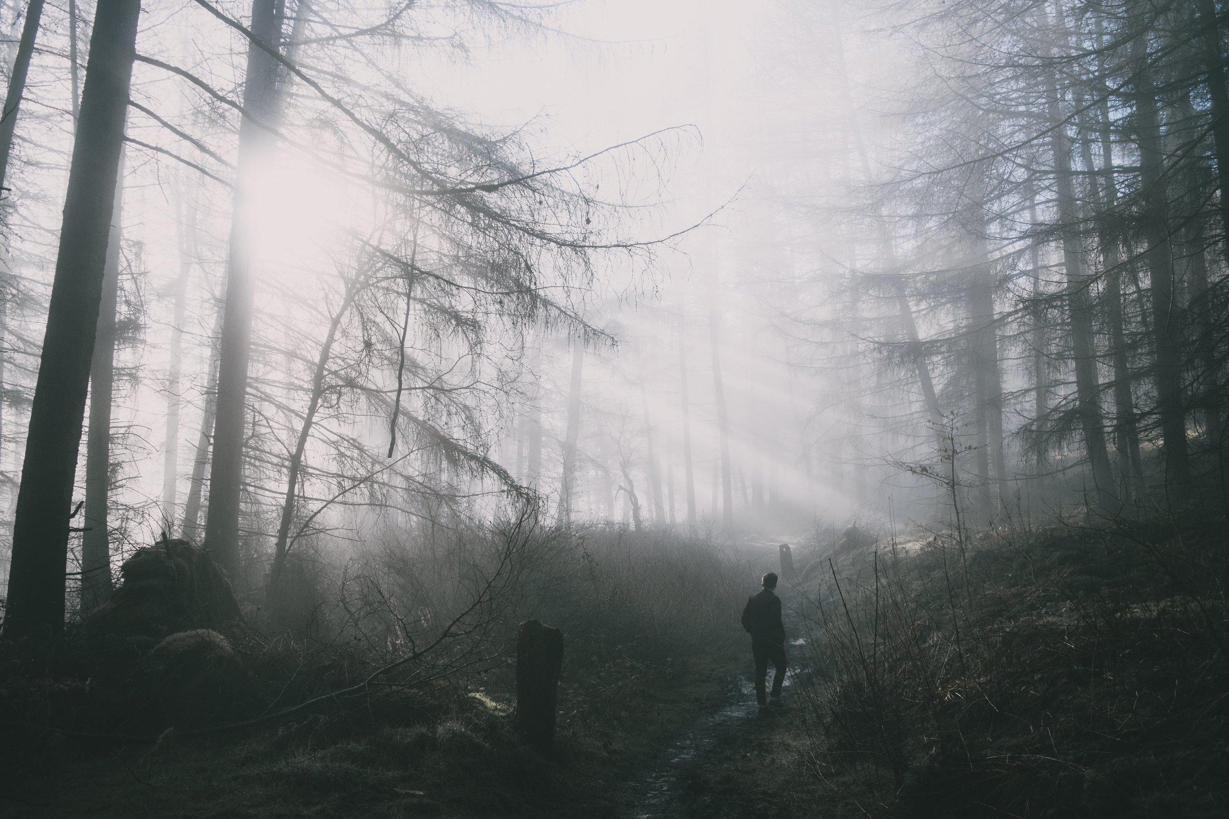 Harry Renton Hippo Magazine Sun Shining through foggy forest