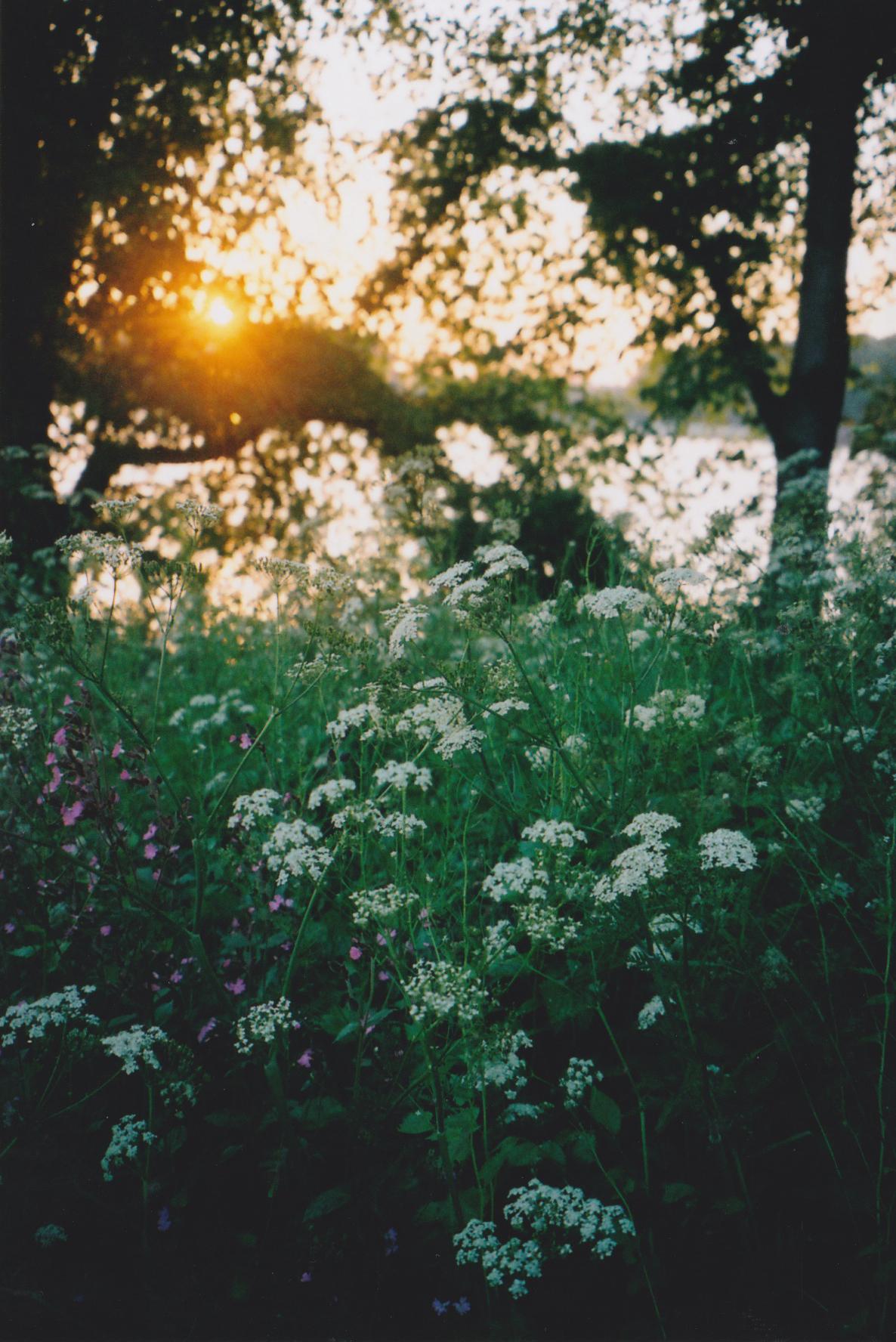 sunset_best.jpeg