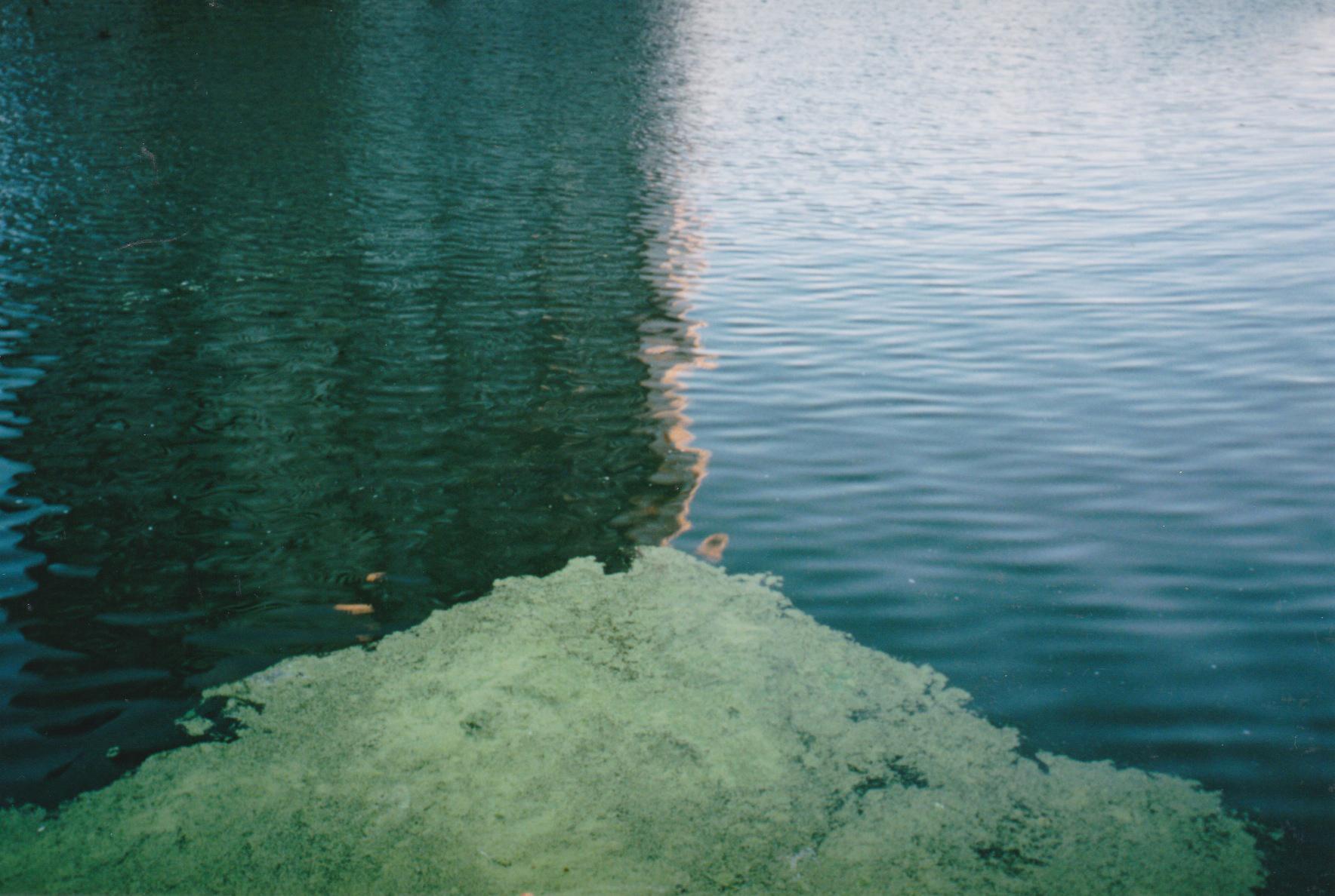 algaealignment_thisyears.jpg