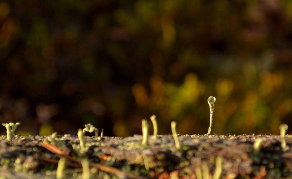 Kuolleesta puusta kasvaa uutta elämää.