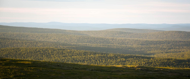 Urho Kekkosen kansallispuiston tunturimaisemaa.