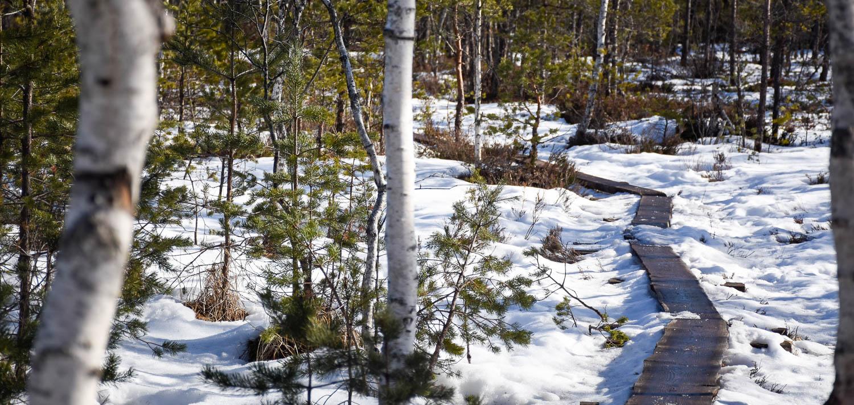 Lumi on jo kovaa vauhtia sulamassa kevään tieltä.