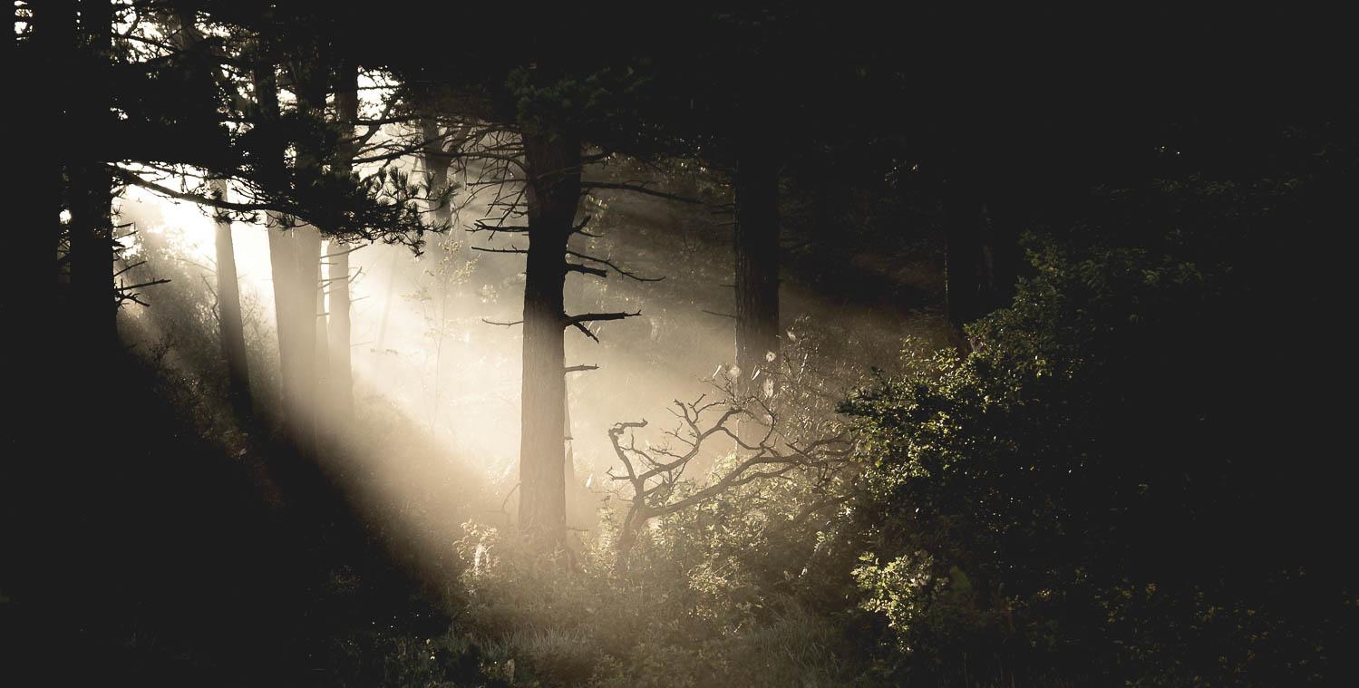 Aamuaurinko löytää tiensä usvaiseen metsään.