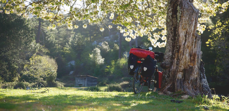 Sopivan puun alta on hyvä hakea suojaa helteeltä.