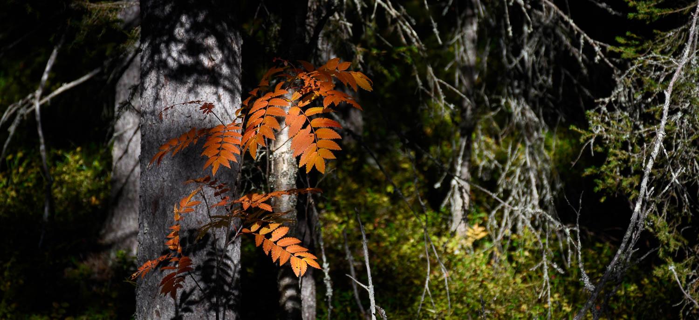 Luonnon syksyistä väriä.