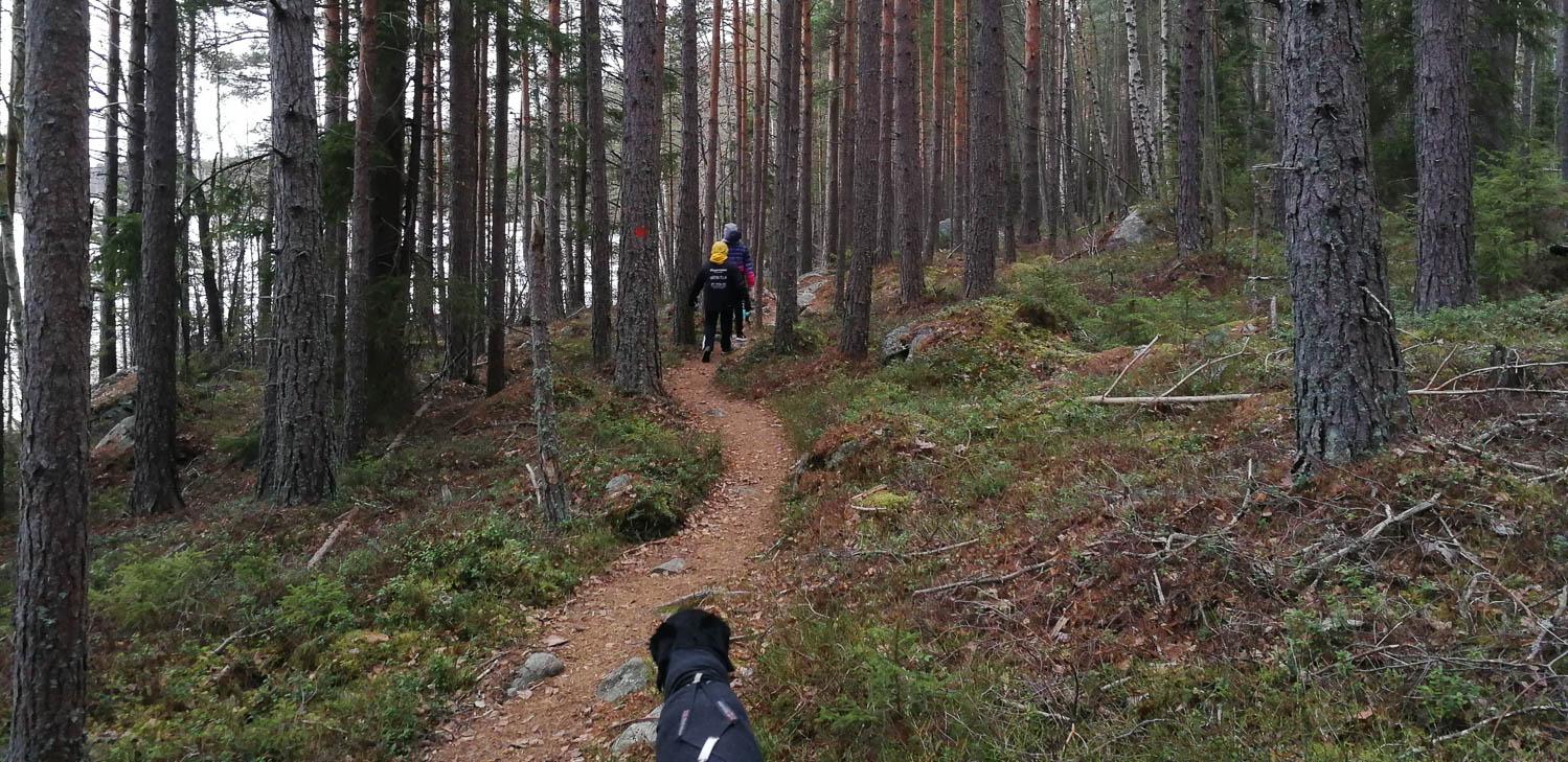 Metsäpolulle mars.
