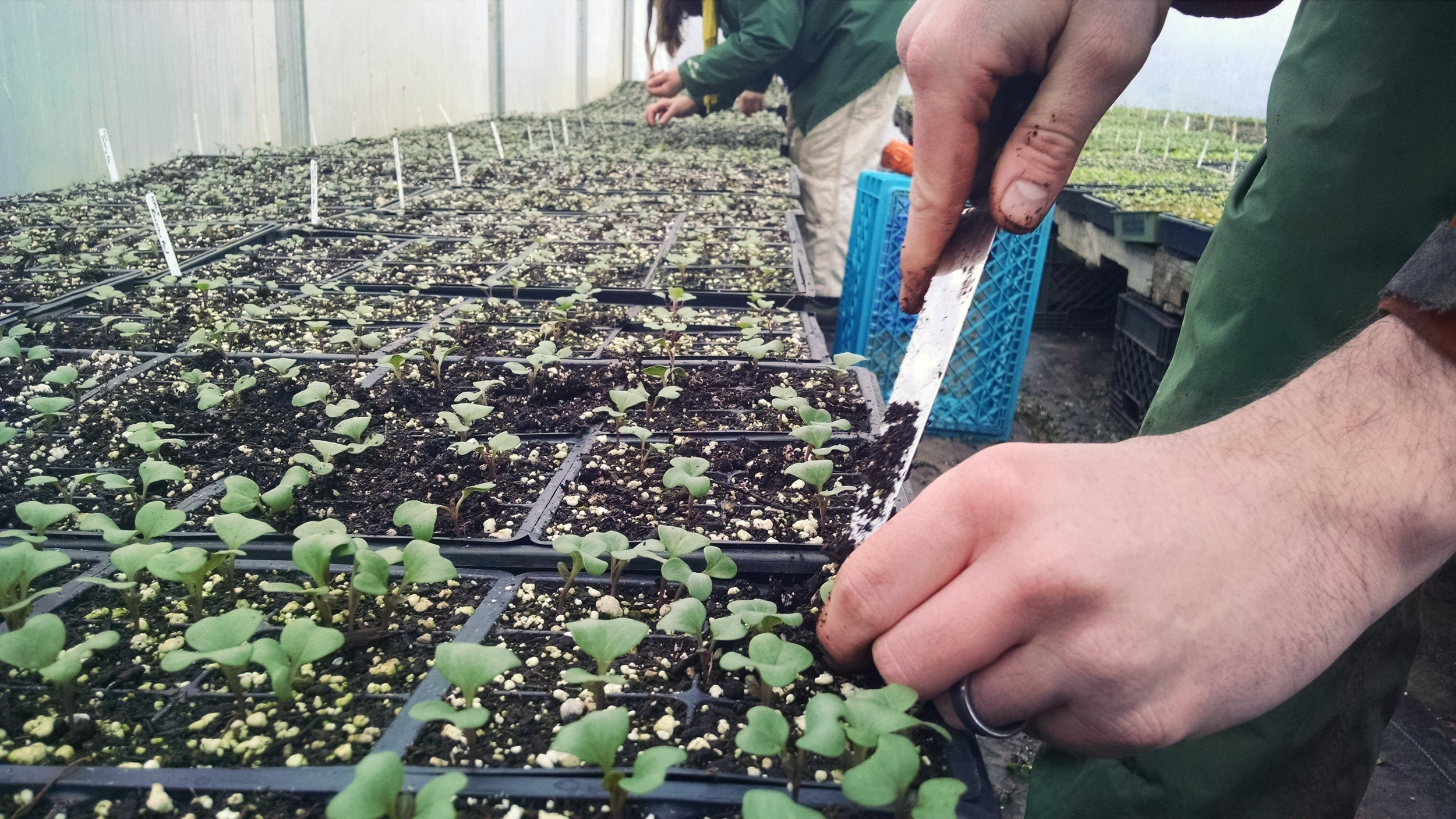 Phil working to fill in plant sale trays