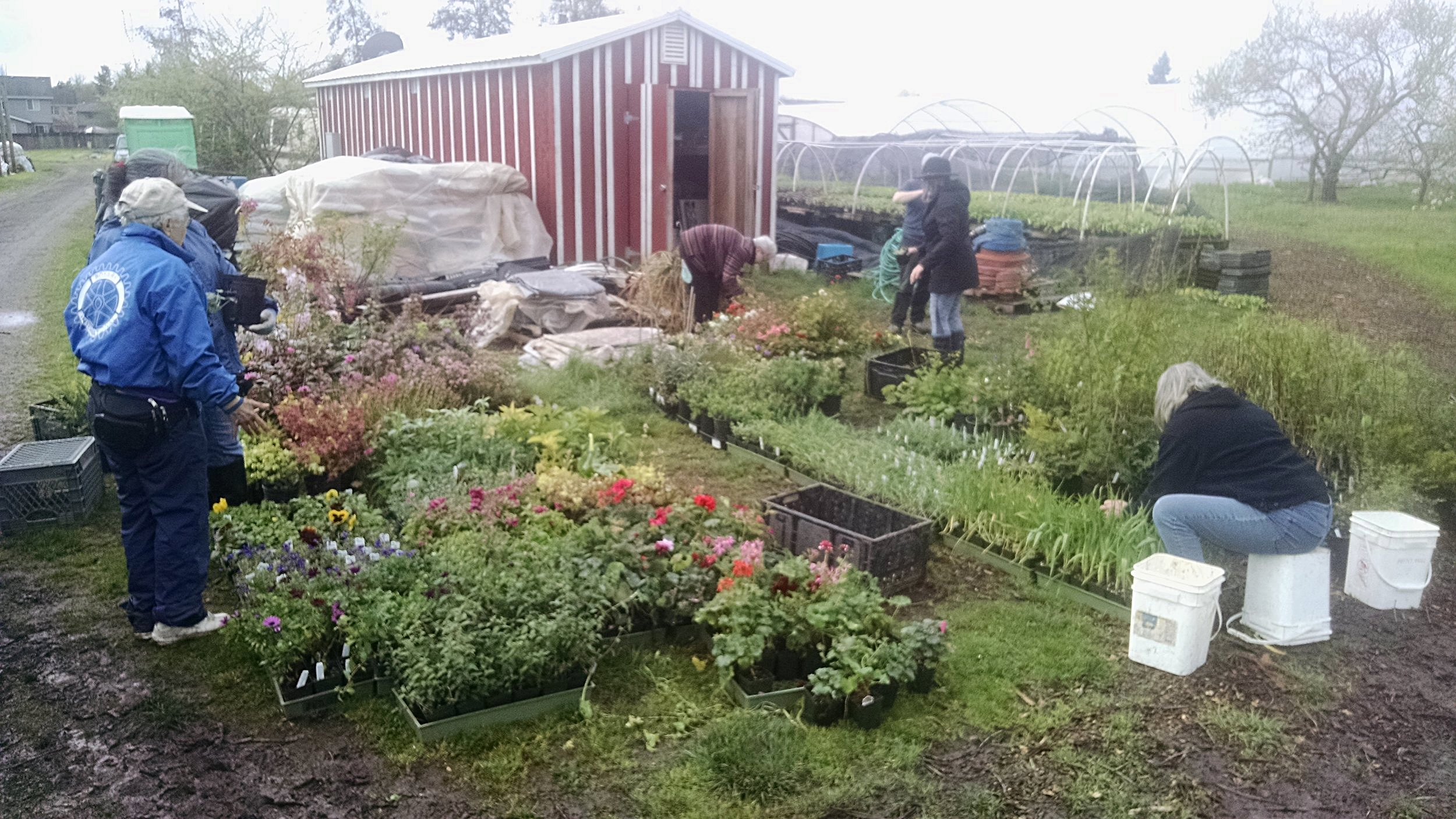 Preparing perennials for the plant sale