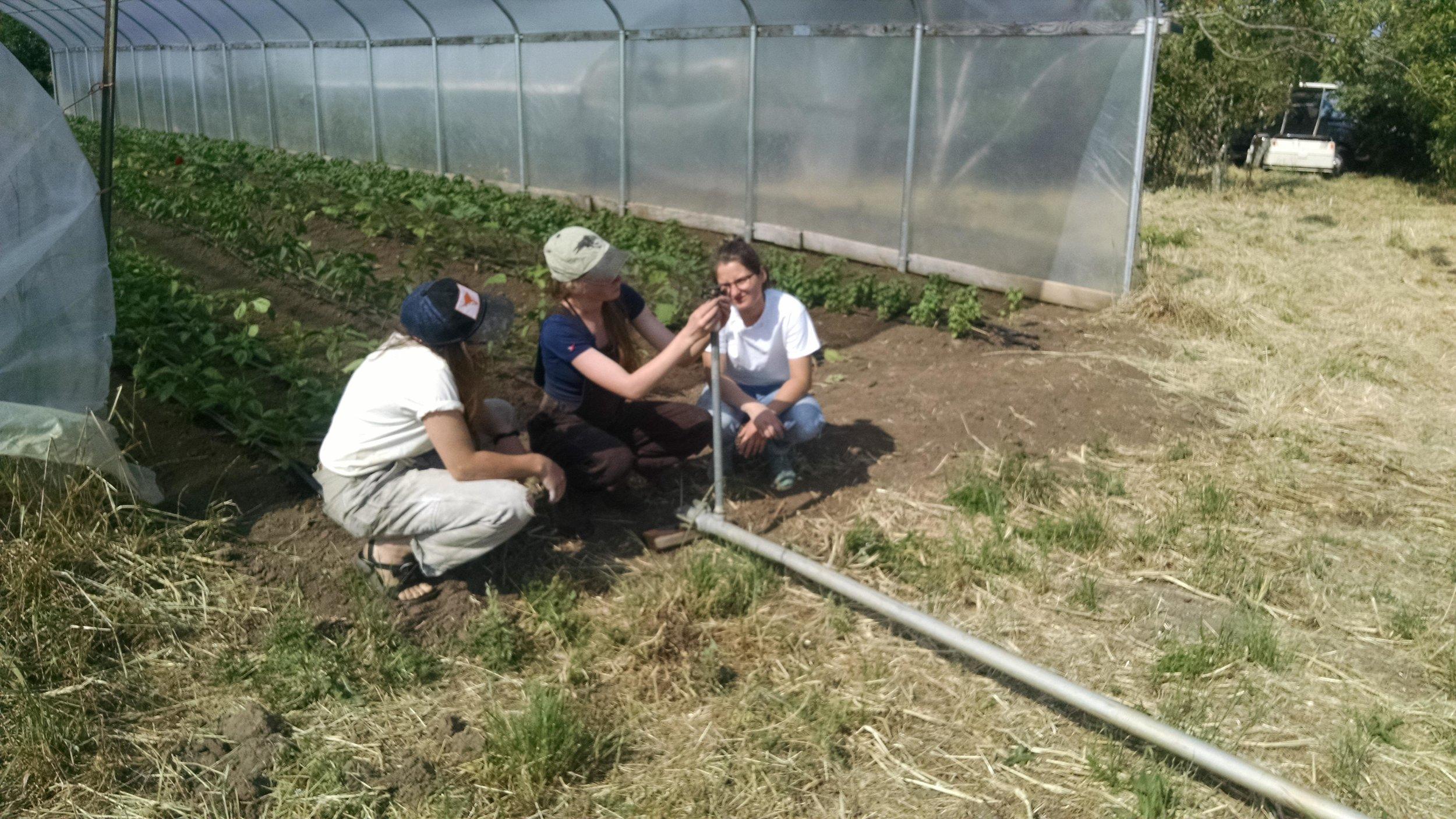 Interns learning to adjust sprinkler heads