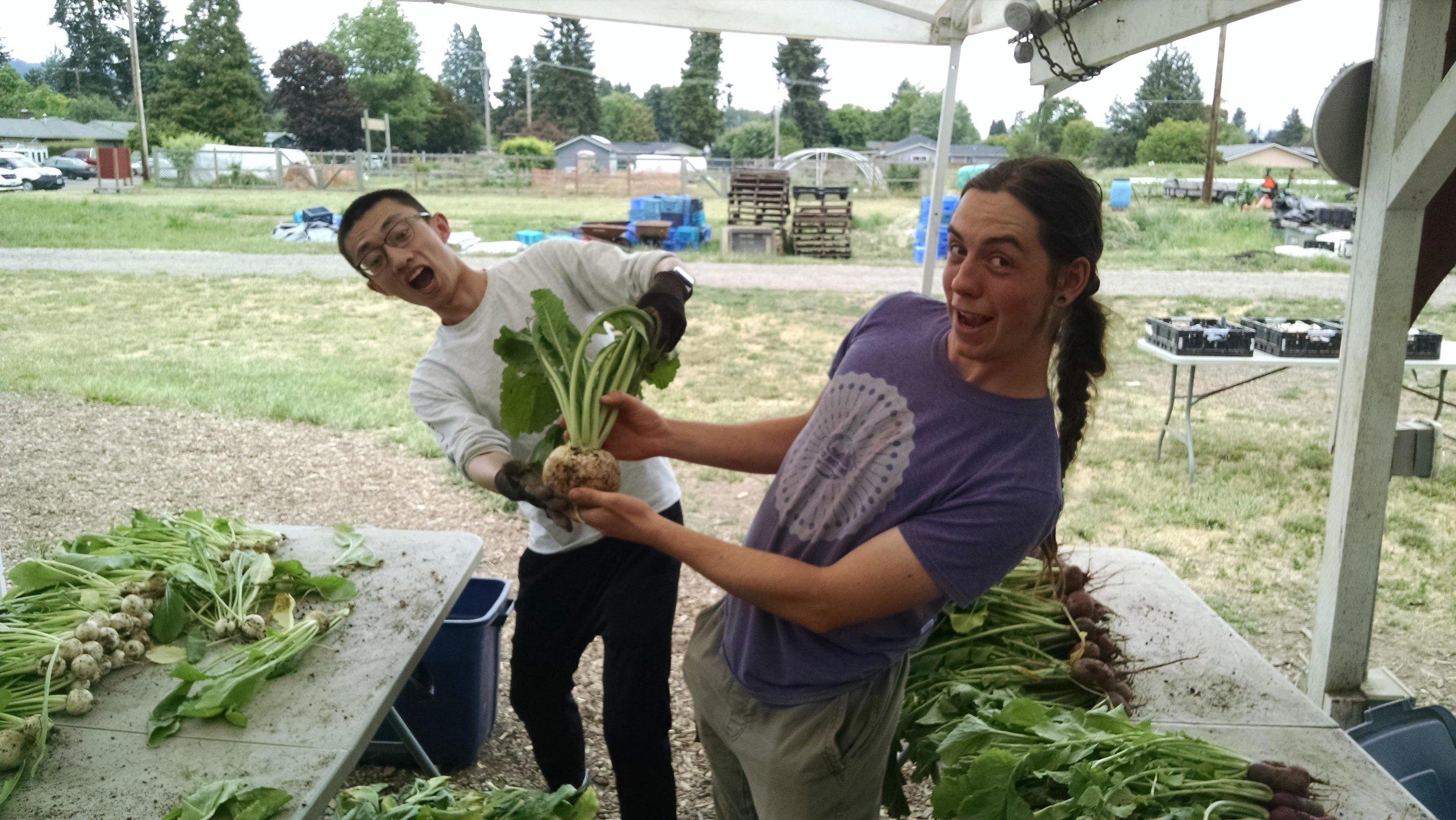 The biggest salad turnip