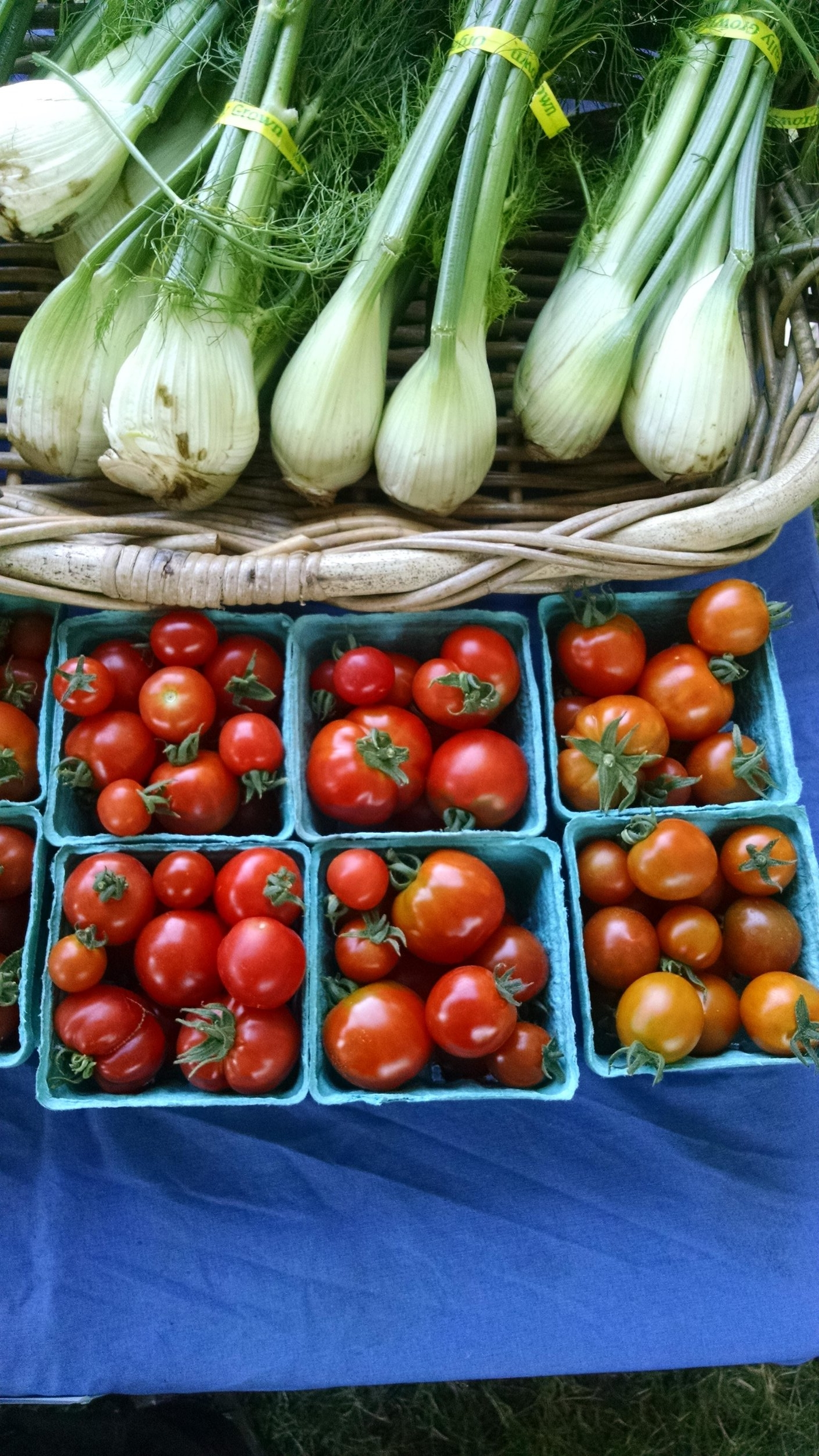 Fennel and tomatoes