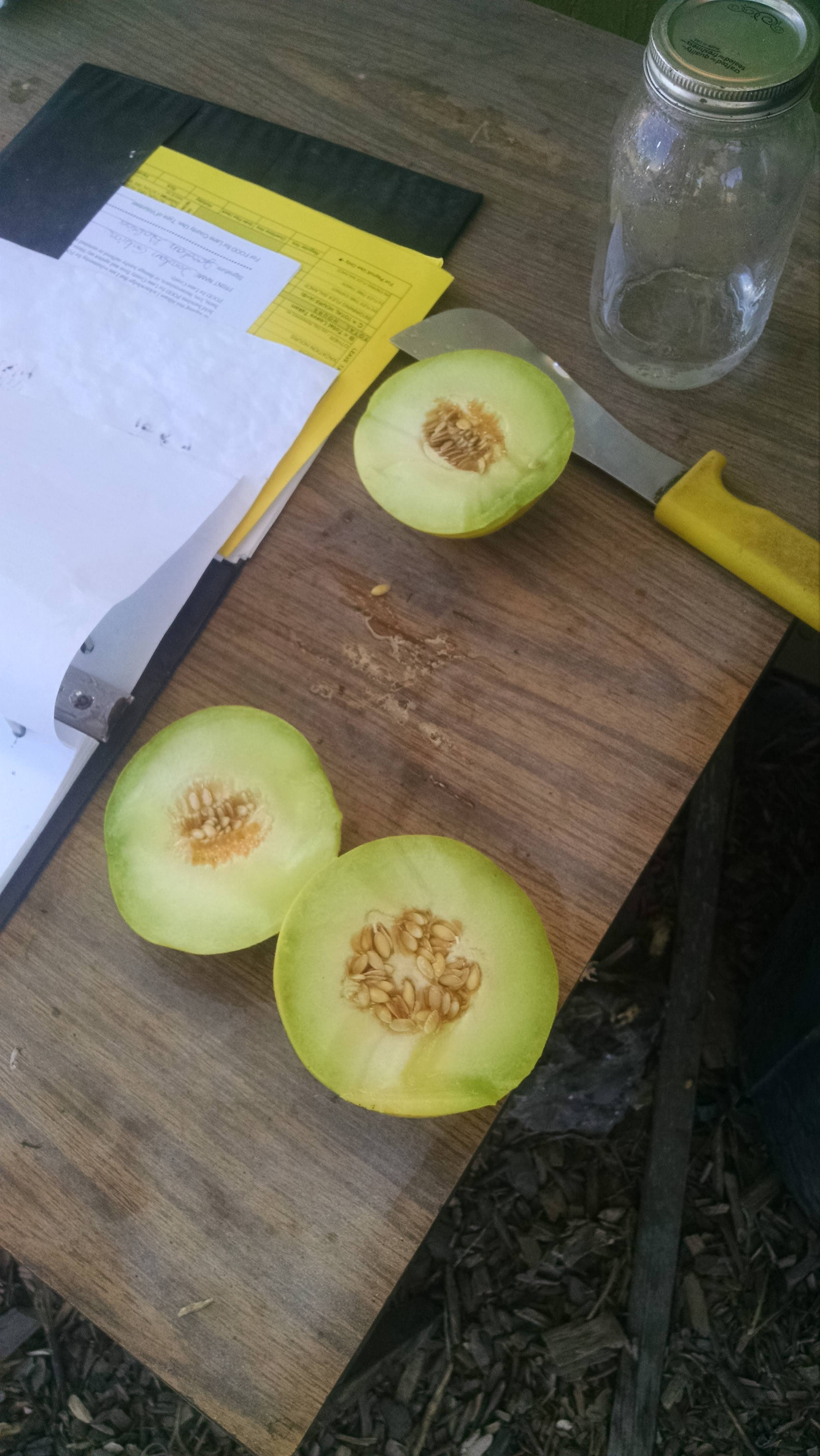 The first melons, so sweet and juicy