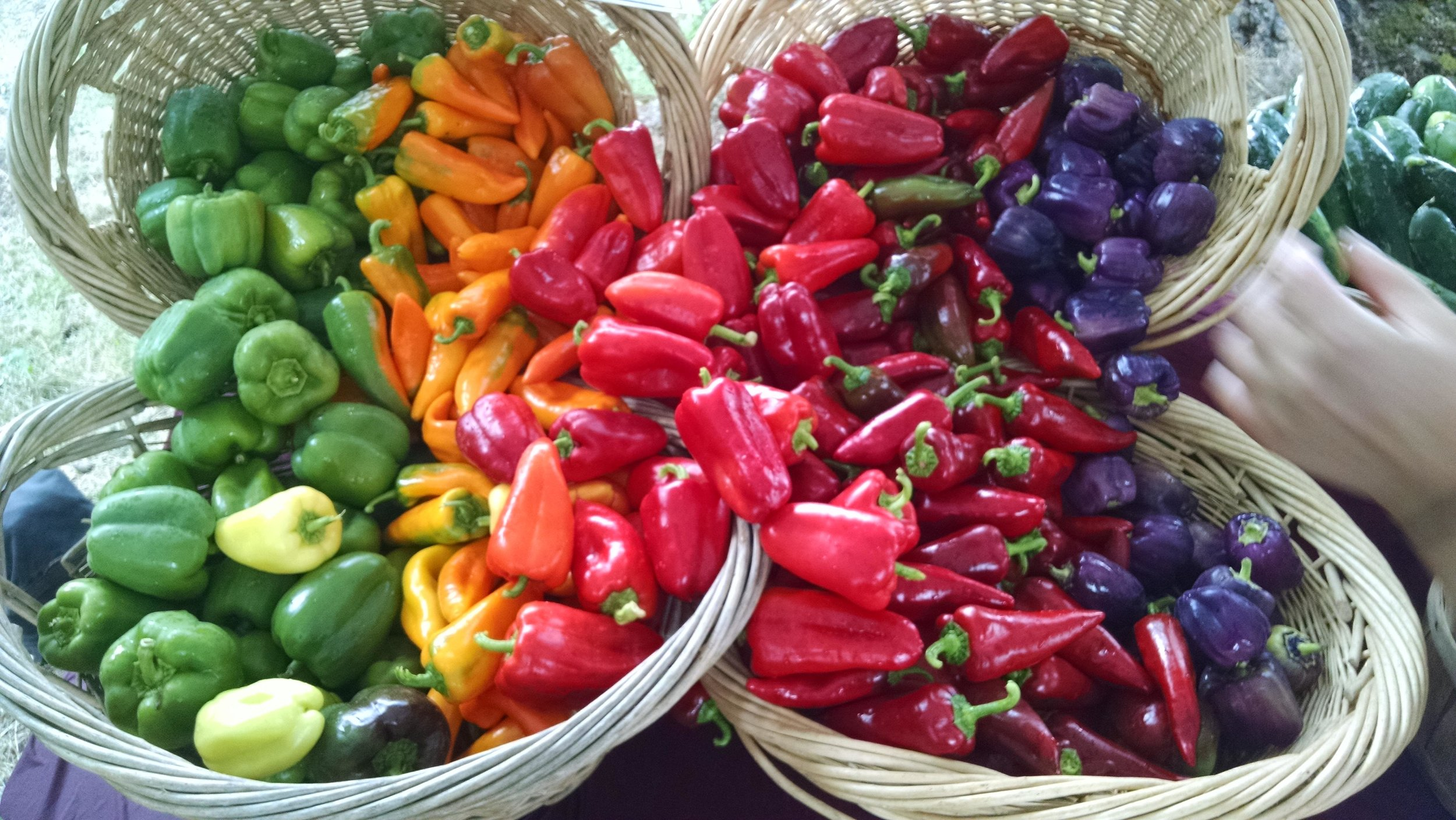 Just another magnificent farm stand pepper display by Sophie