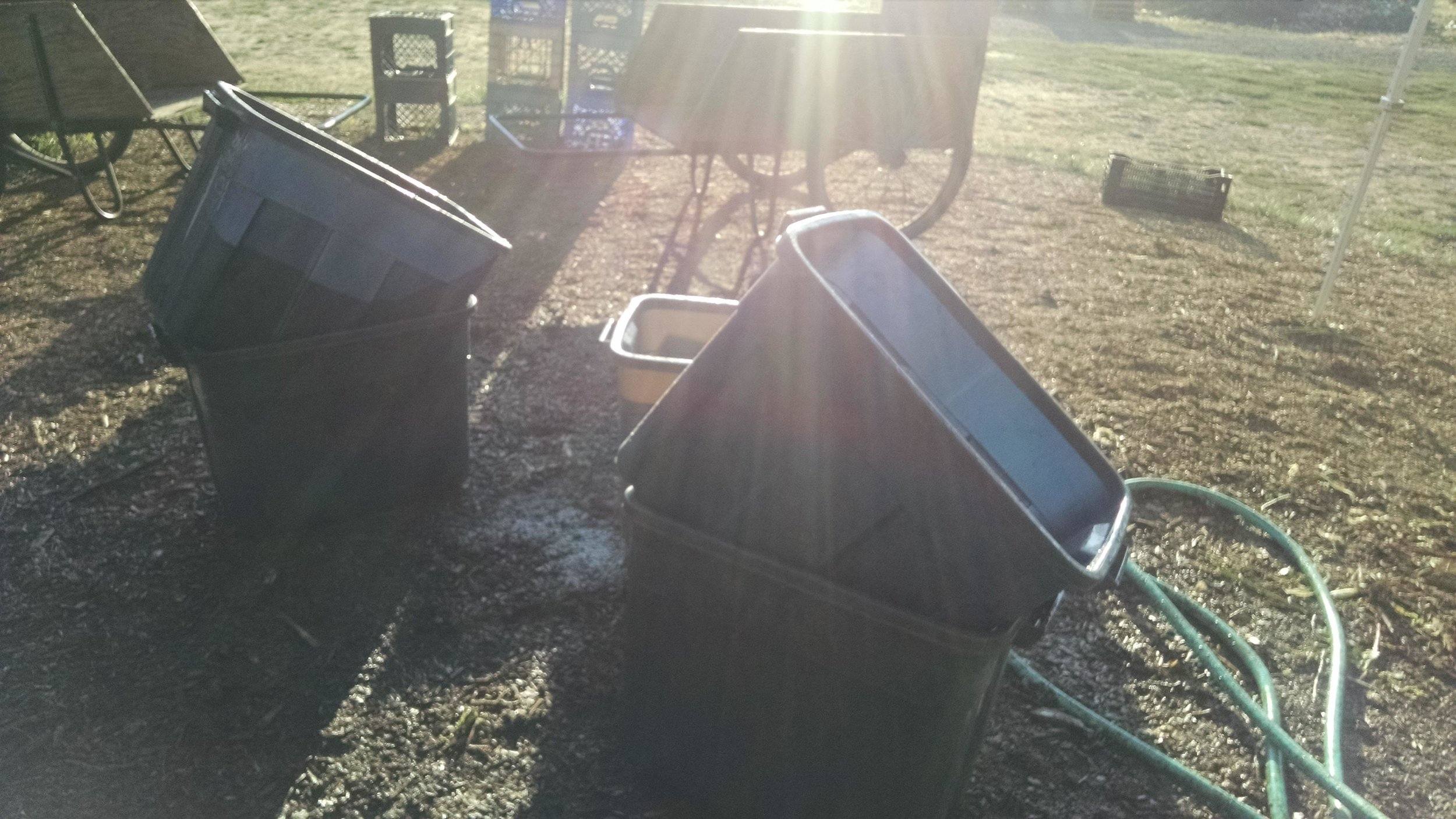 Washing totes at sunrise