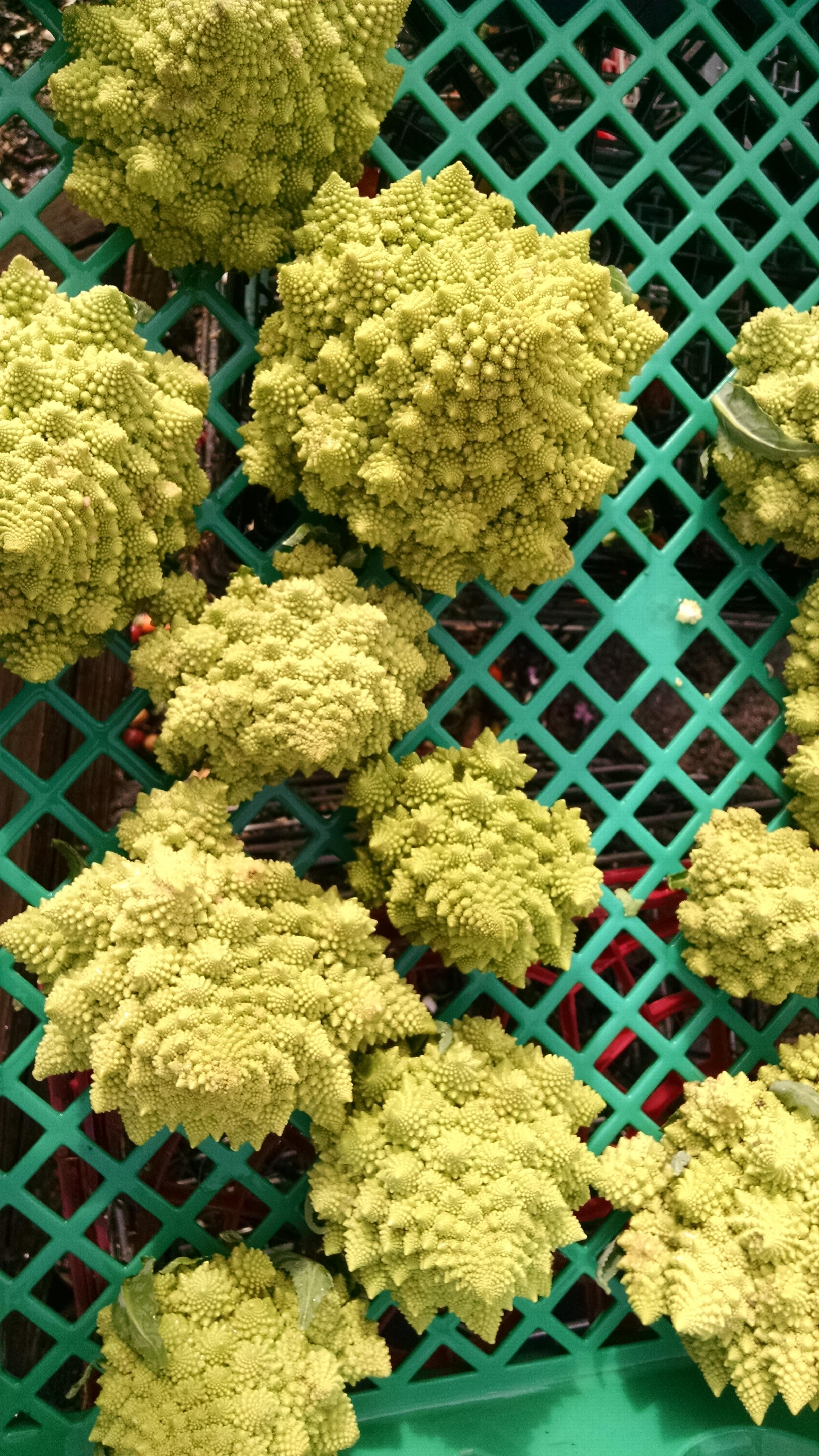 "Romanesco, aka ""fractal cauli"""