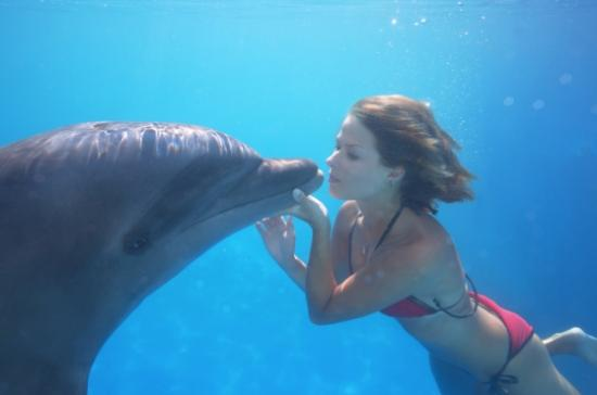 cabo-dolphins.jpg