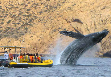cabo-whale-watching-tour-2.jpg