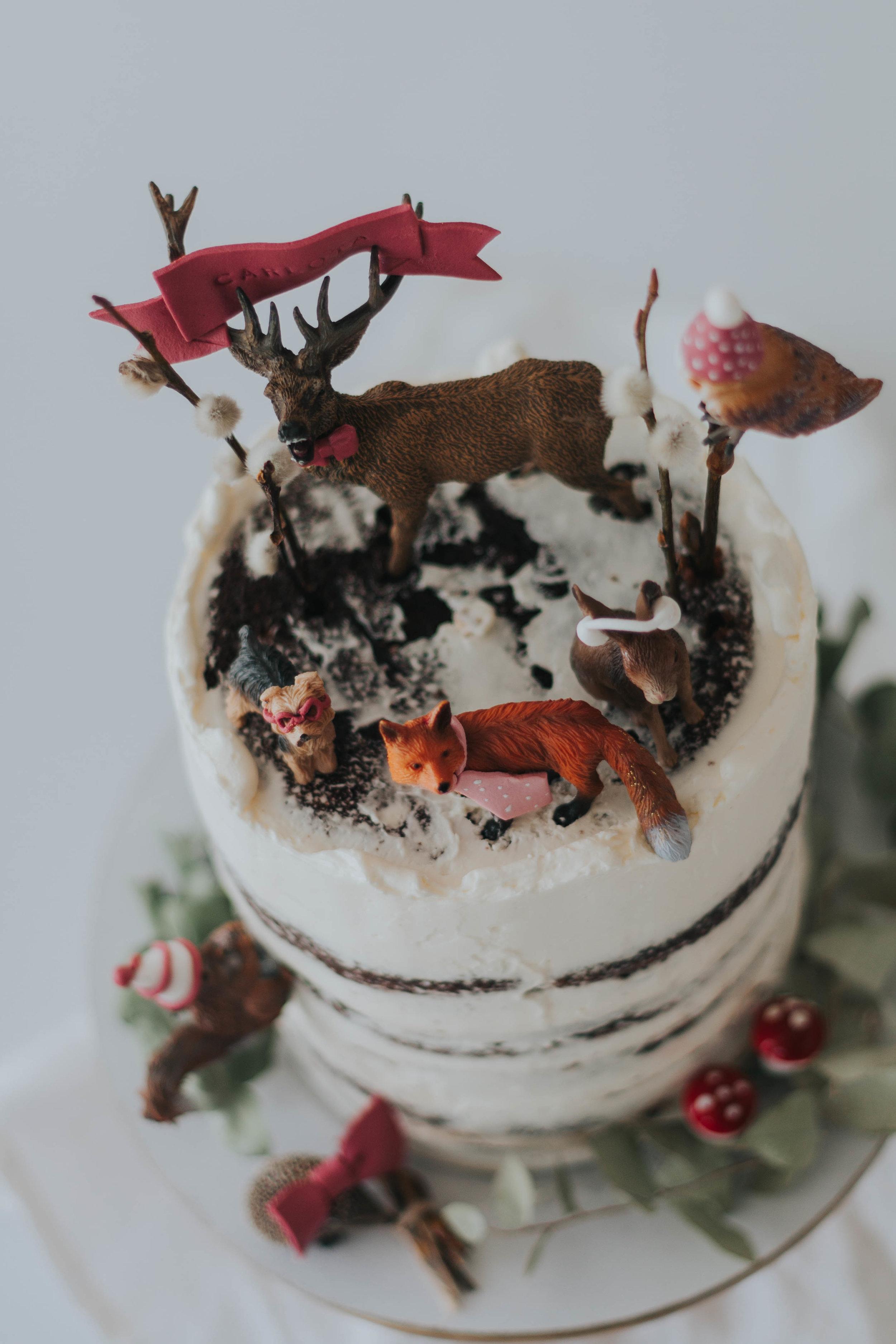 Torte Wildlife