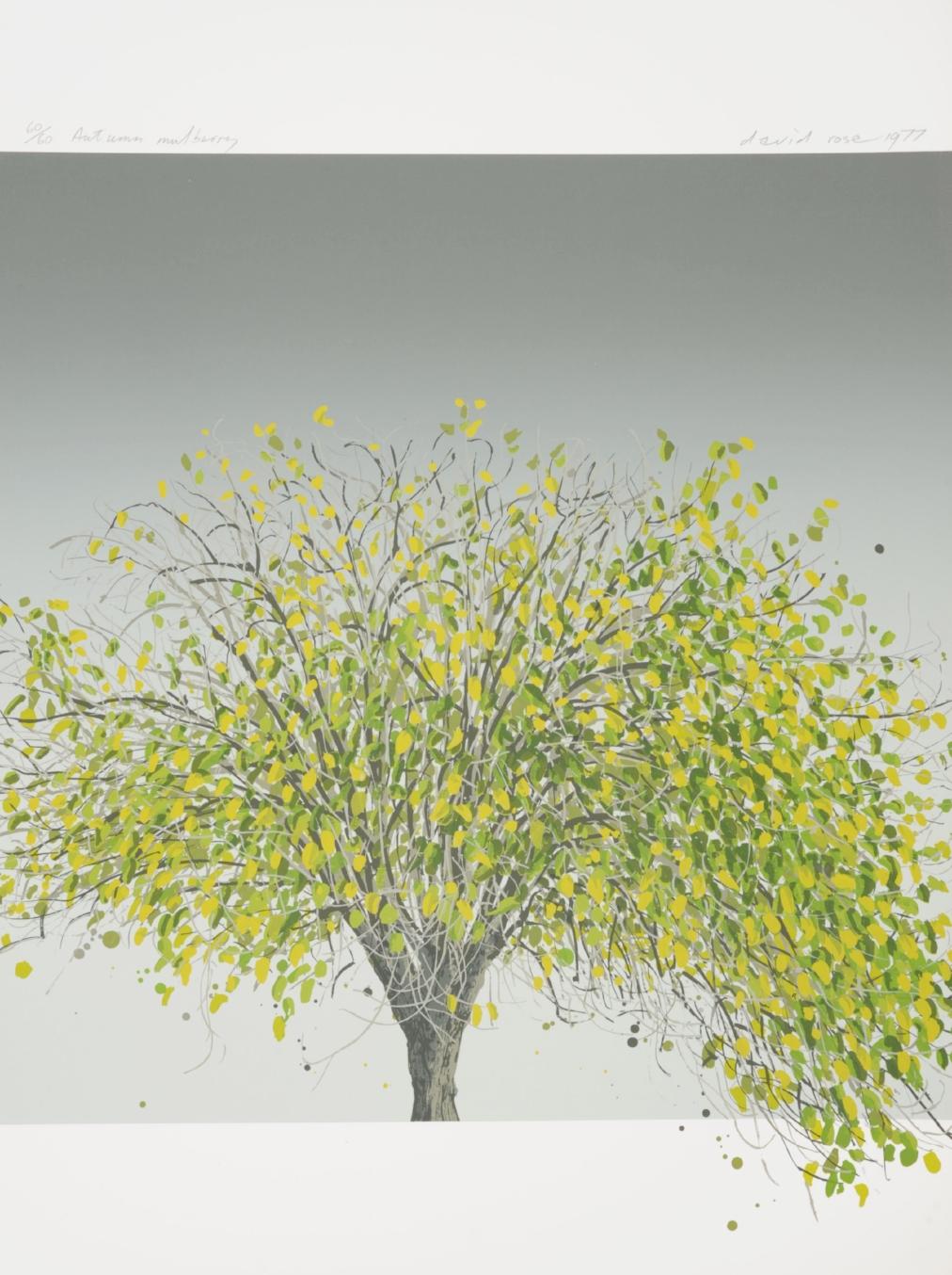 1977 Autumn mulberry.JPG