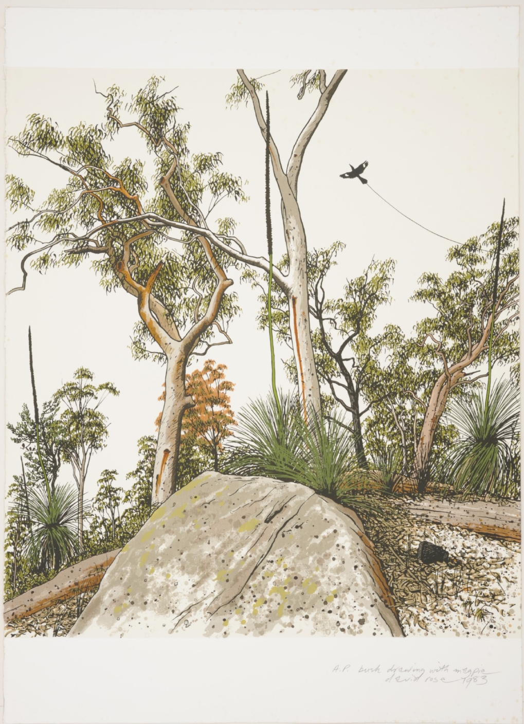 1983 bush drawing with magpie.JPG