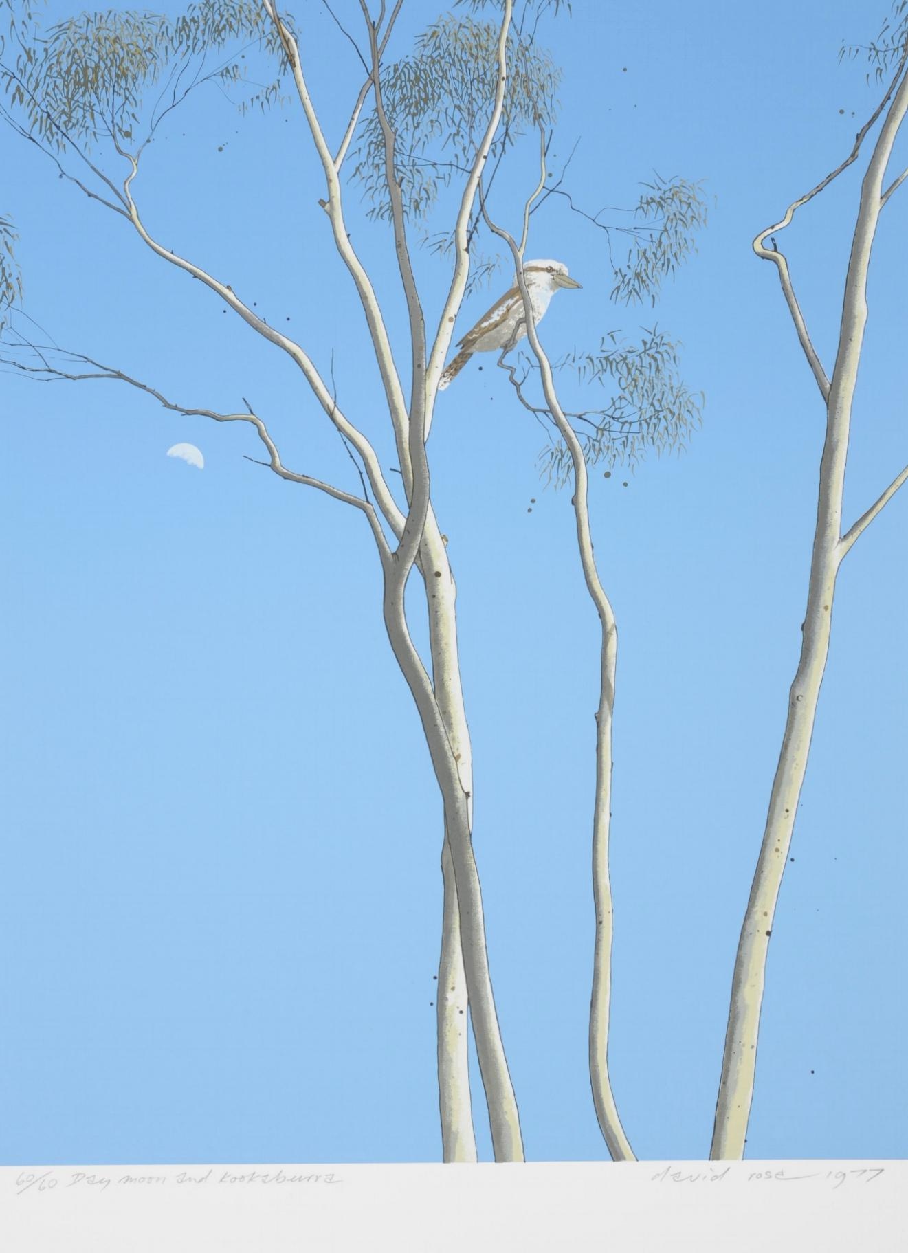 1977 Day moon and Kookaburra.JPG