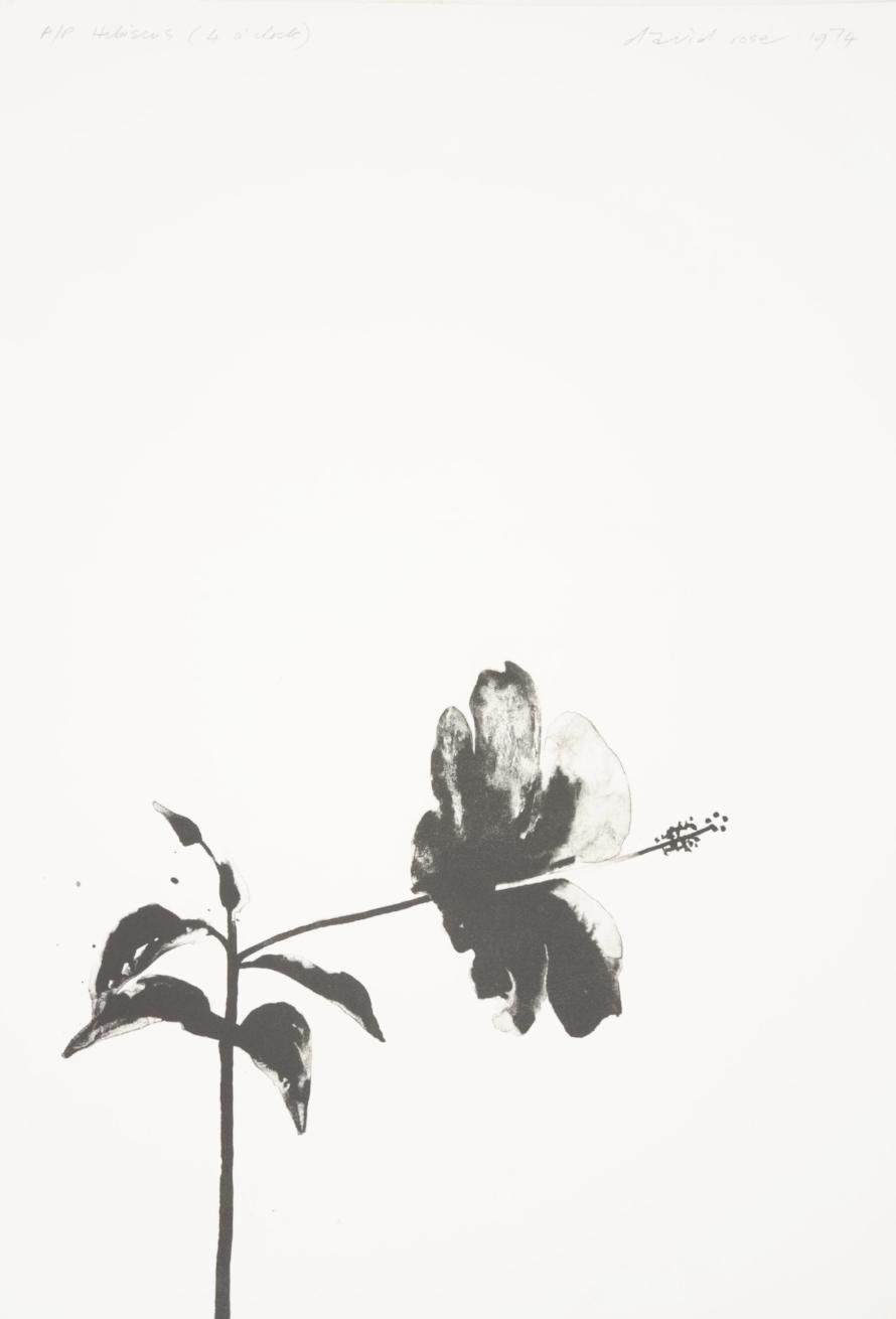 1974 Hibiscus (4 o'clock).JPG