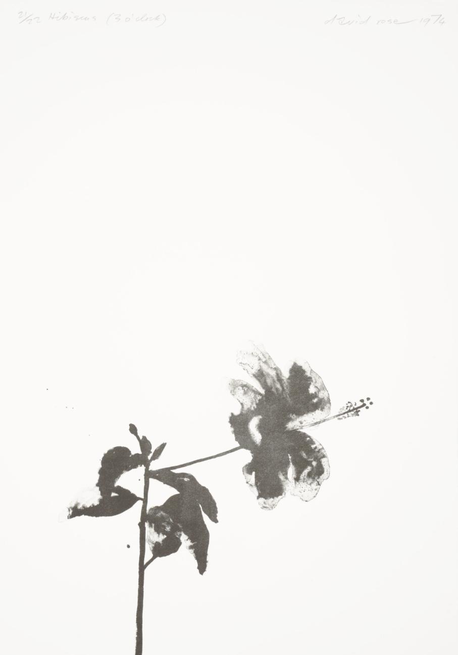 1974 Hibiscus (3 o'clock).JPG